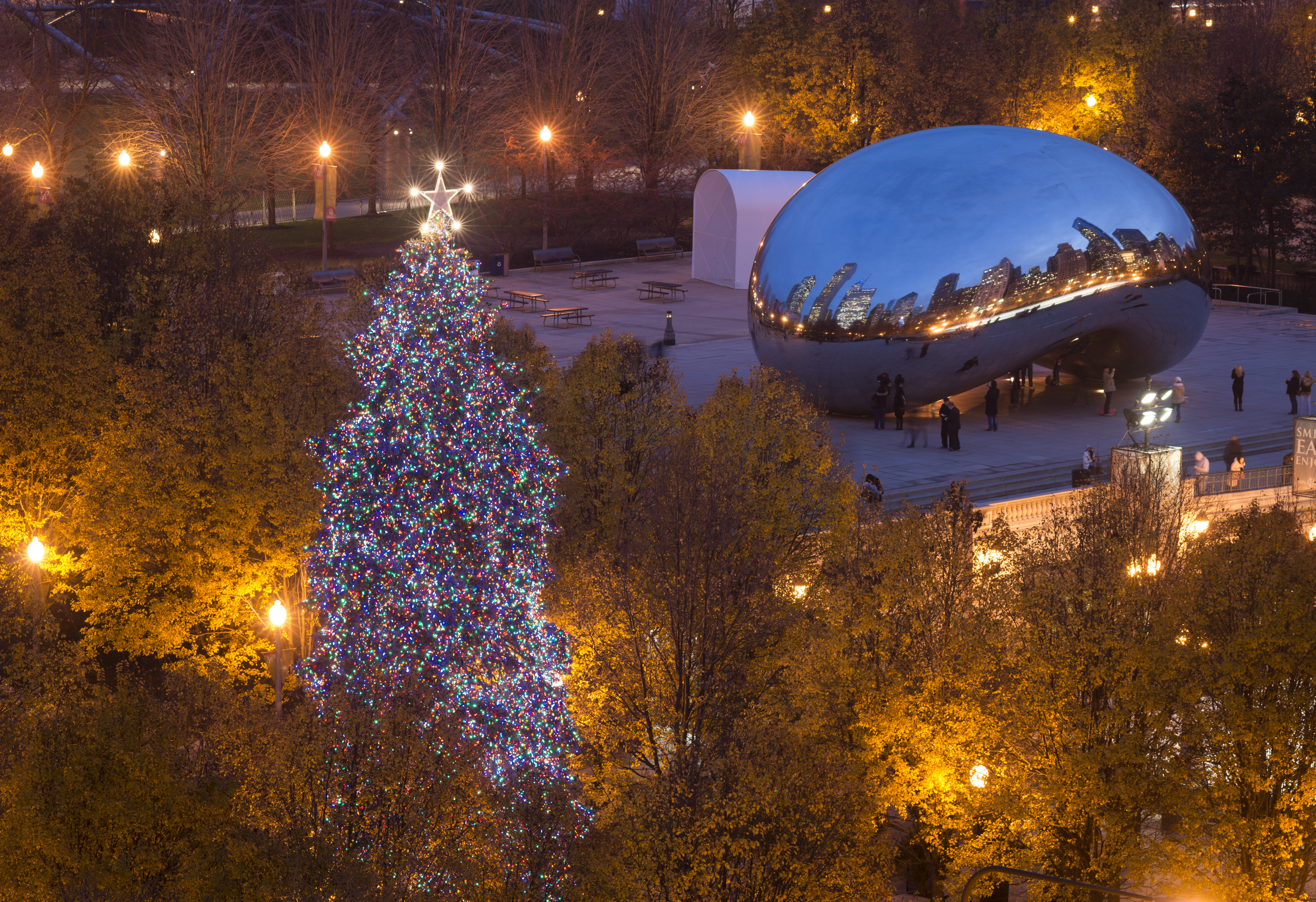 The lighting of Chicago's official Christmas tree will take place Nov. 22 in Millennium Park.