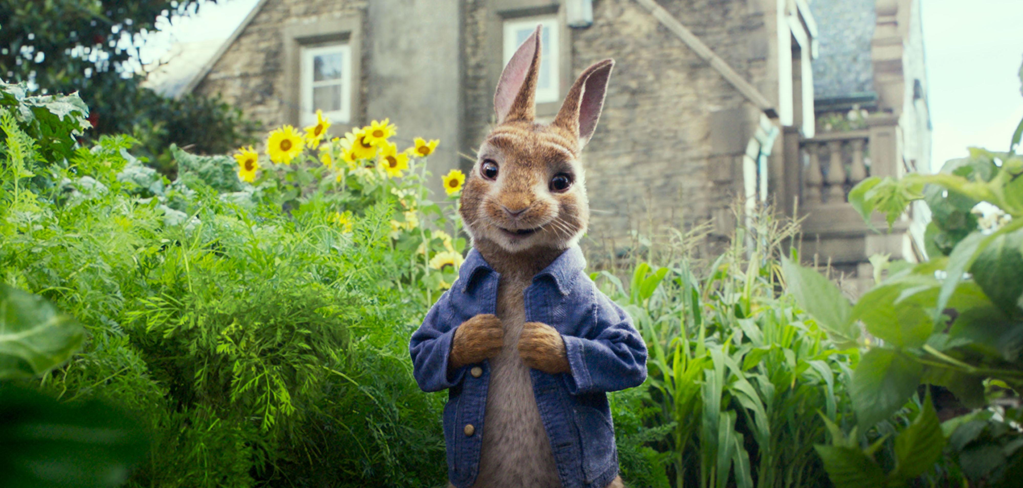 """Peter Rabbit (James Corden) in """"Peter Rabbit."""""""