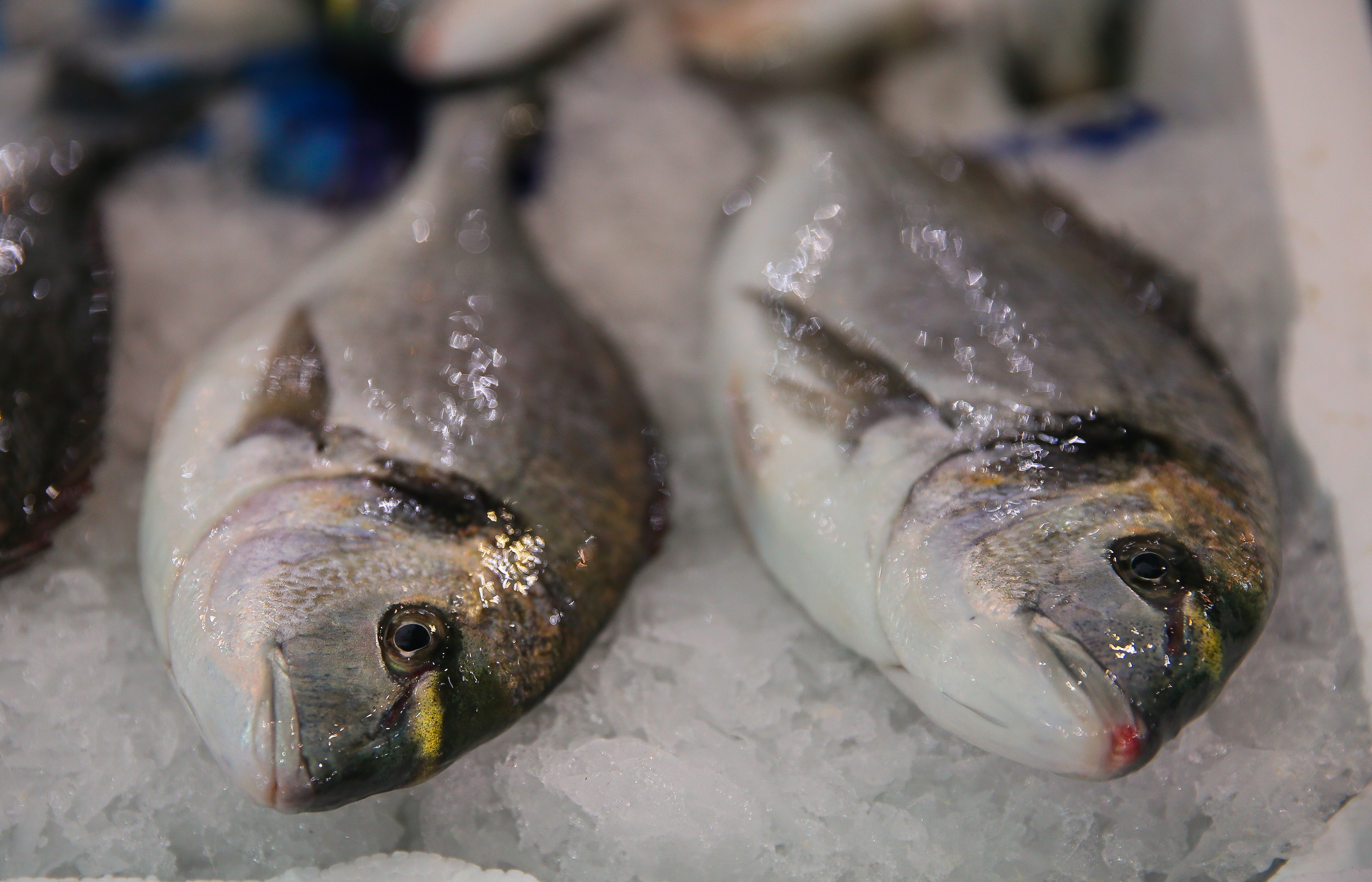 A close-up photo of two fresh fish on ice