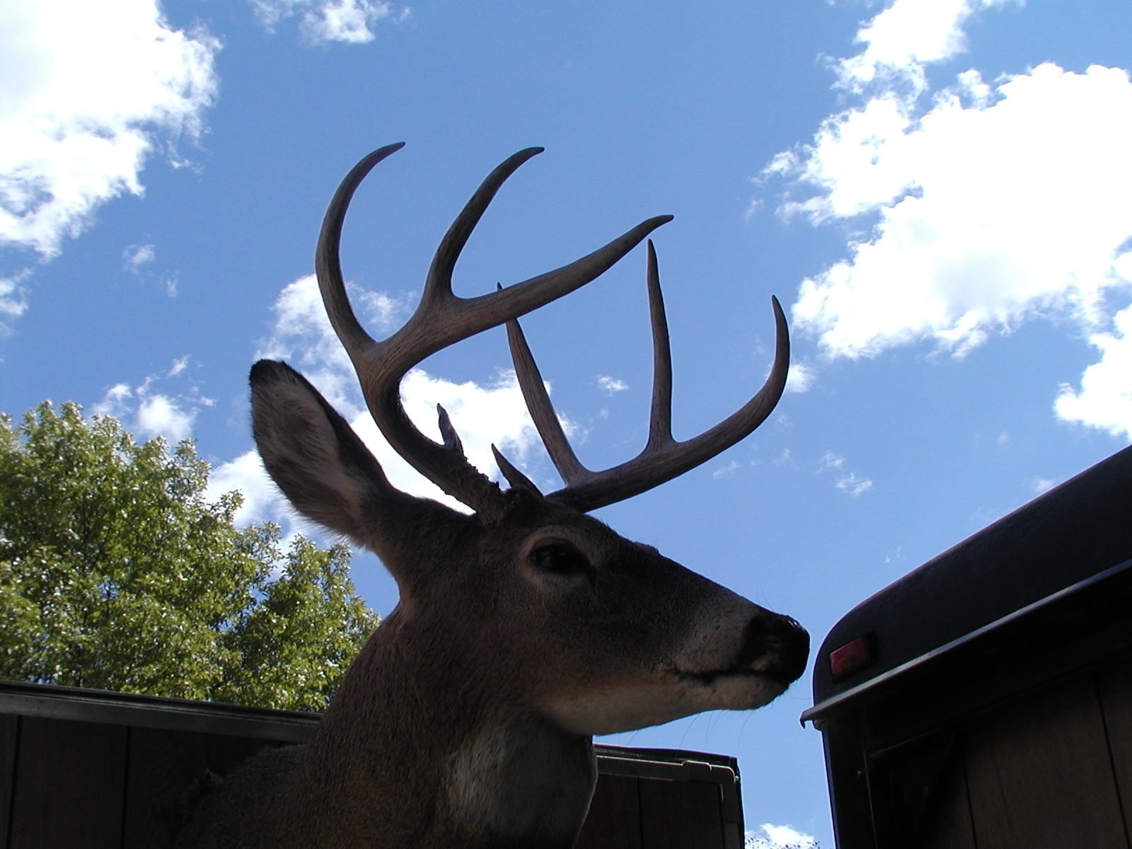 File photo of a mounted deer head against the sky.