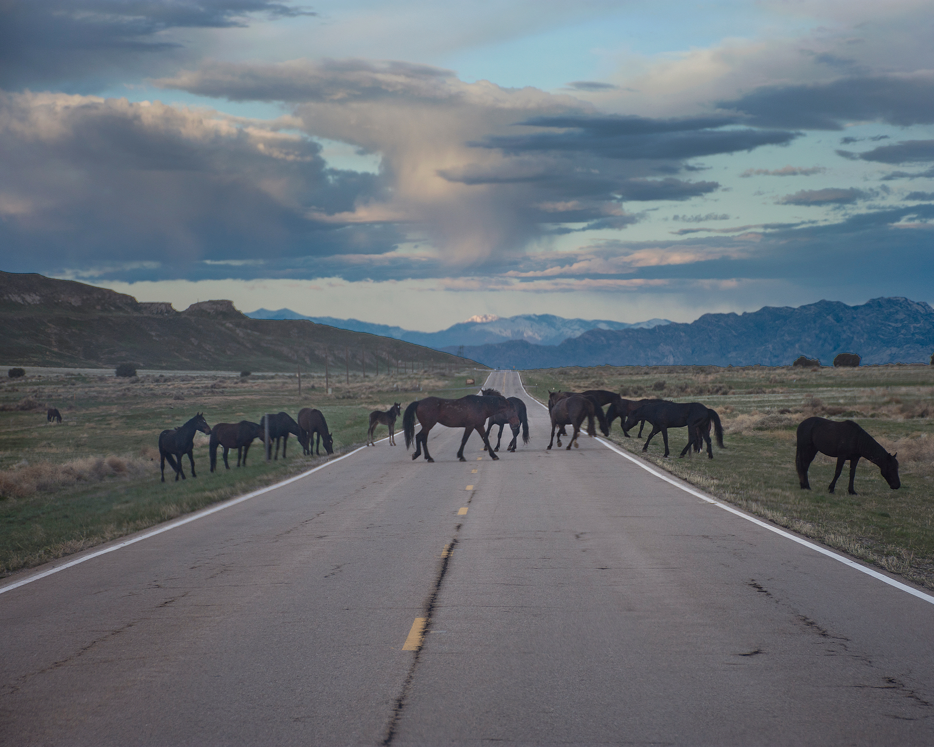 Wild horses graze beside and cross Stark Road at Dugway Proving Ground on Friday, April 26, 2019.