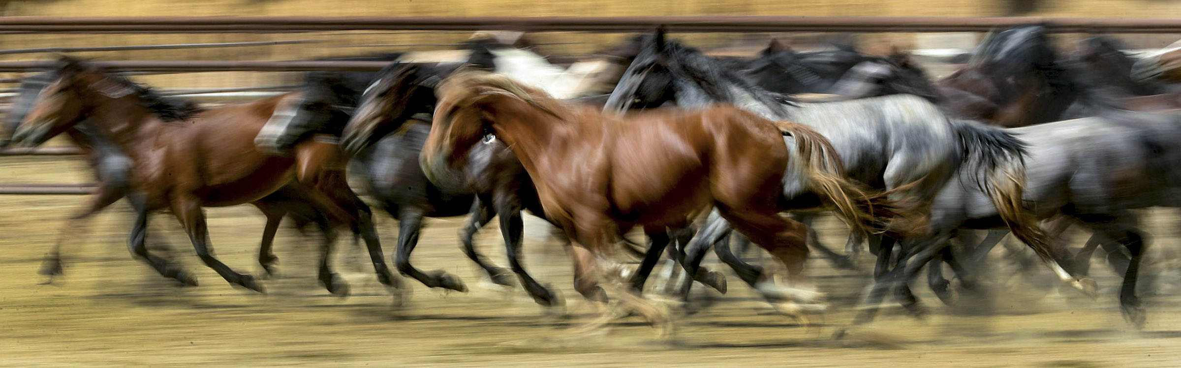 Wild horses run together at the Axtell contract off-range corrals in Axtell, Sanpete County, on Thursday, Sept. 5, 2019. The Axtell facility is one of two locations in Utah that provides care to wild horses removed from the range.