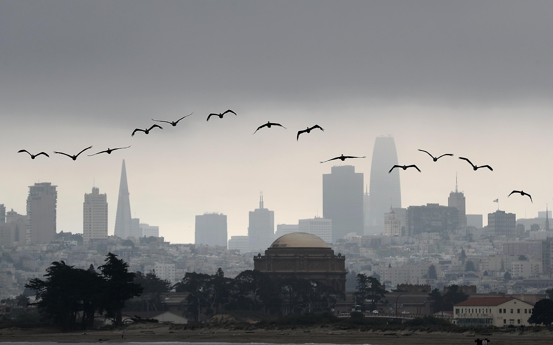 Birds fly against the San Francisco skyline