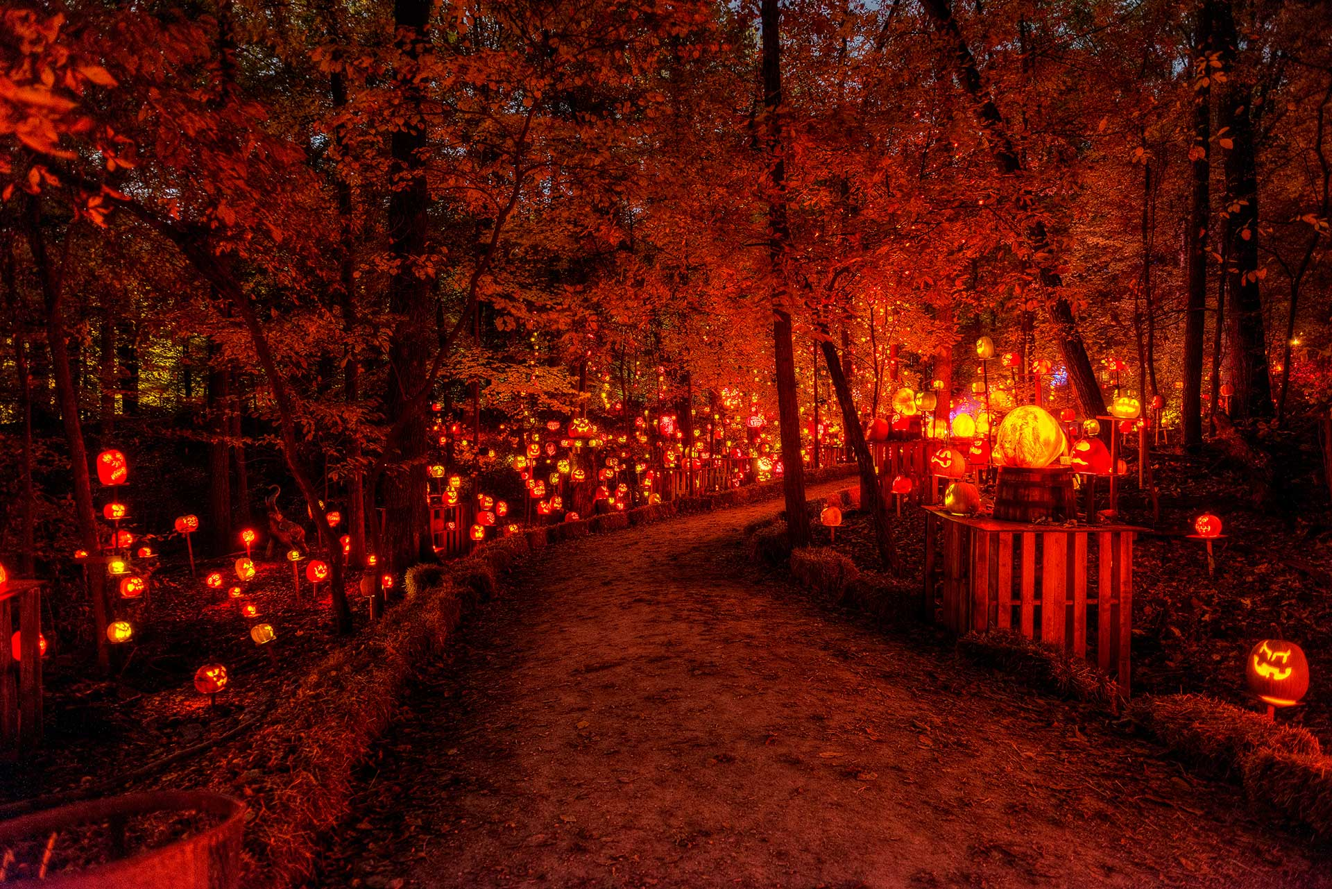 A darkened path illuminated by ornately carved pumpkins