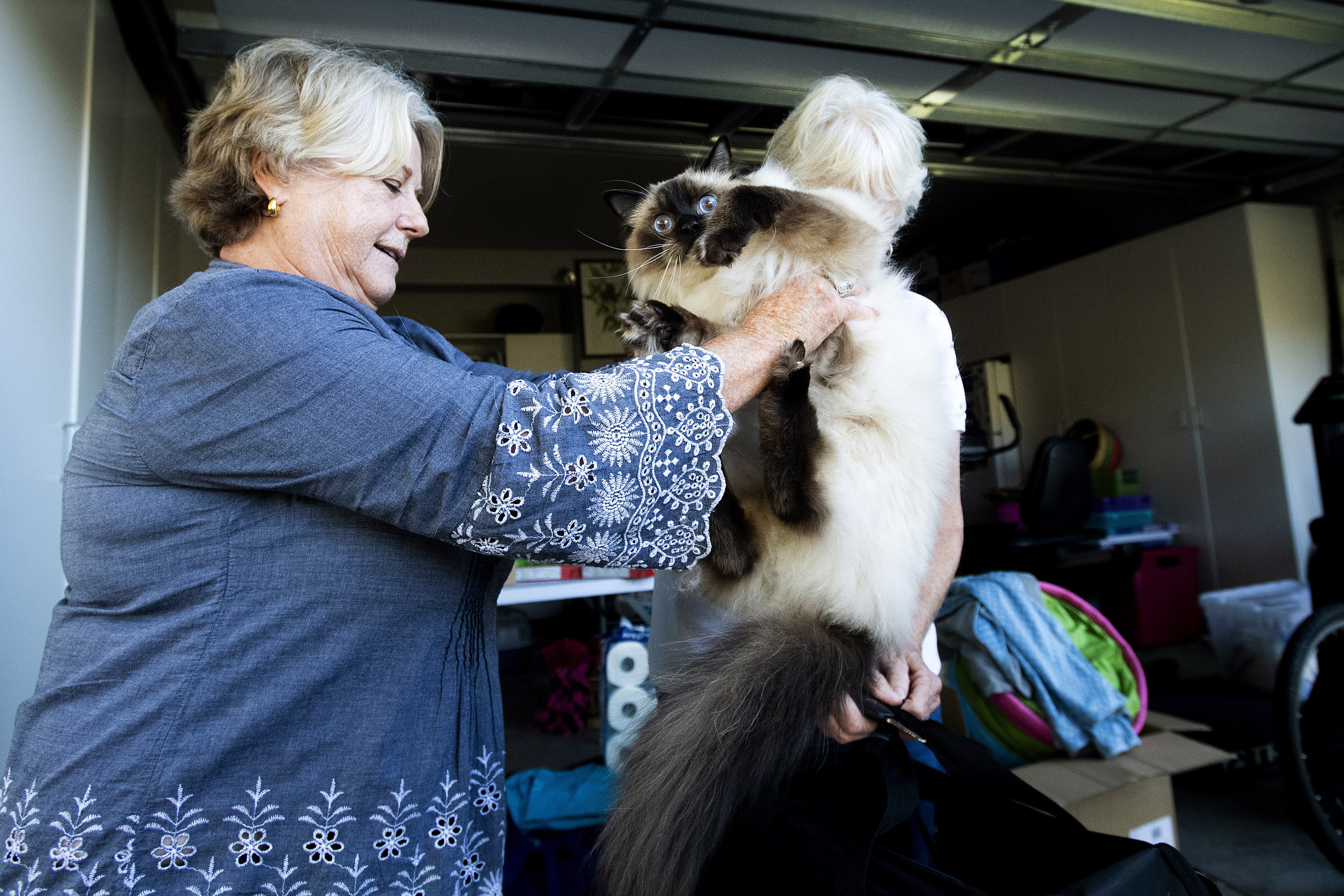 Woman in blue dress holding her big fluffy cat, who looks so scared, as she prepares to leave.