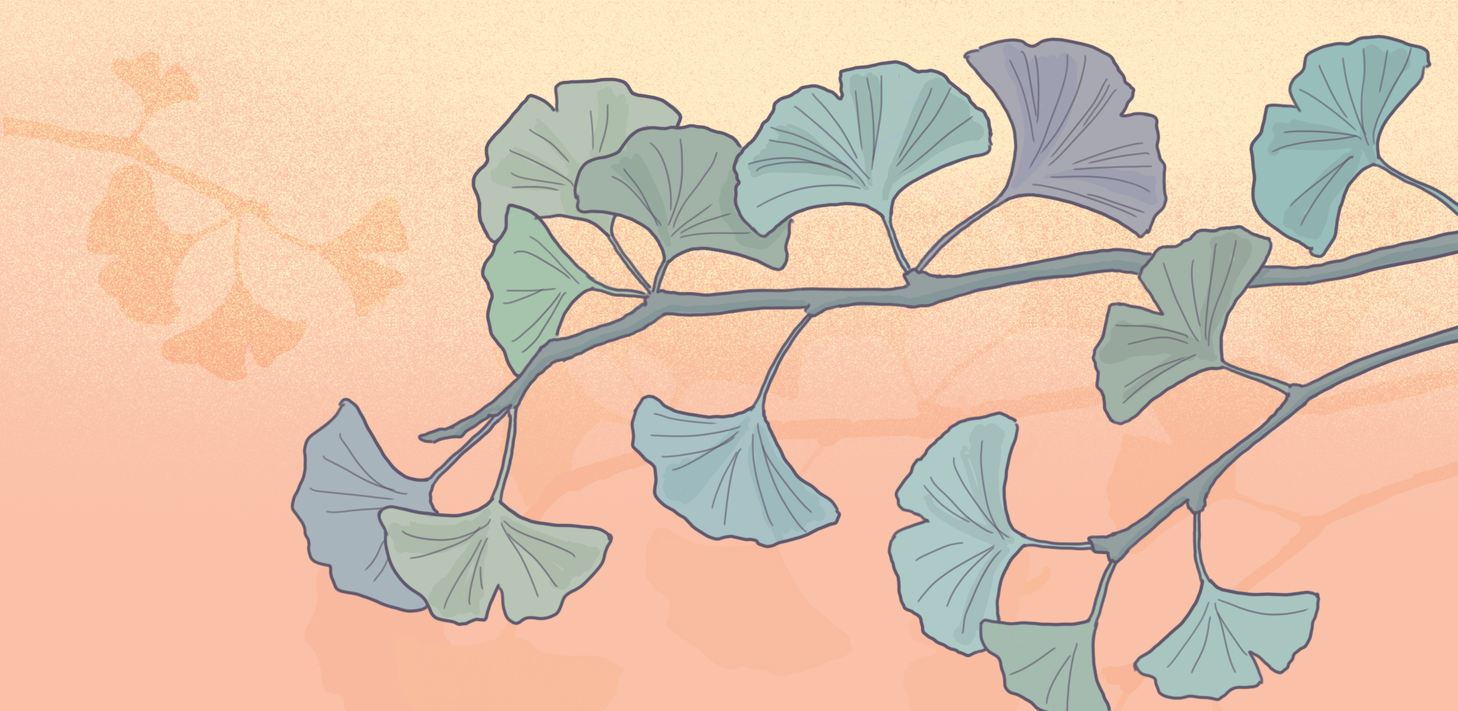 Consider the ginkgo