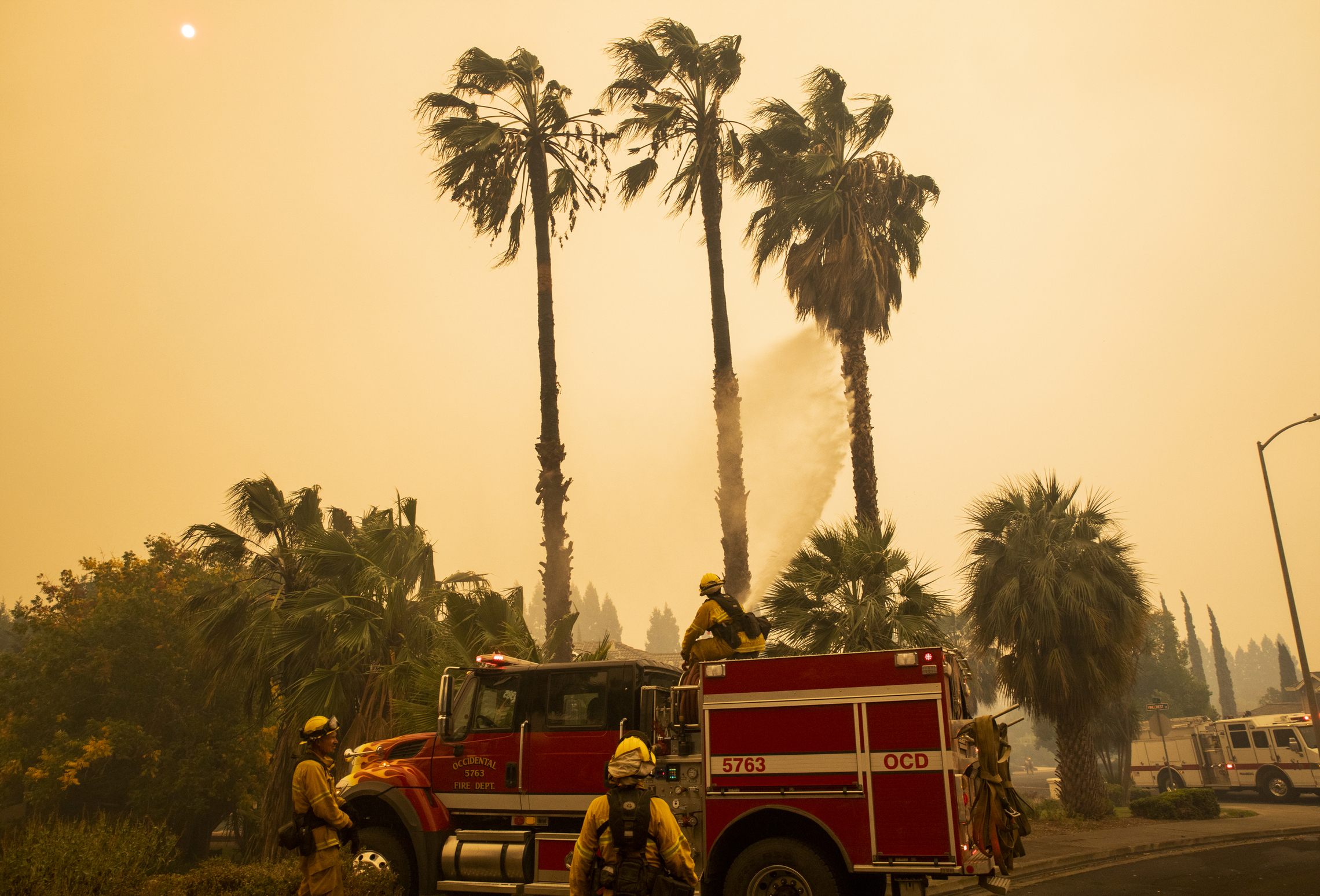 A firefighter standing in front of a fire engine sprays water toward a group of palm trees against a bright orange sky.