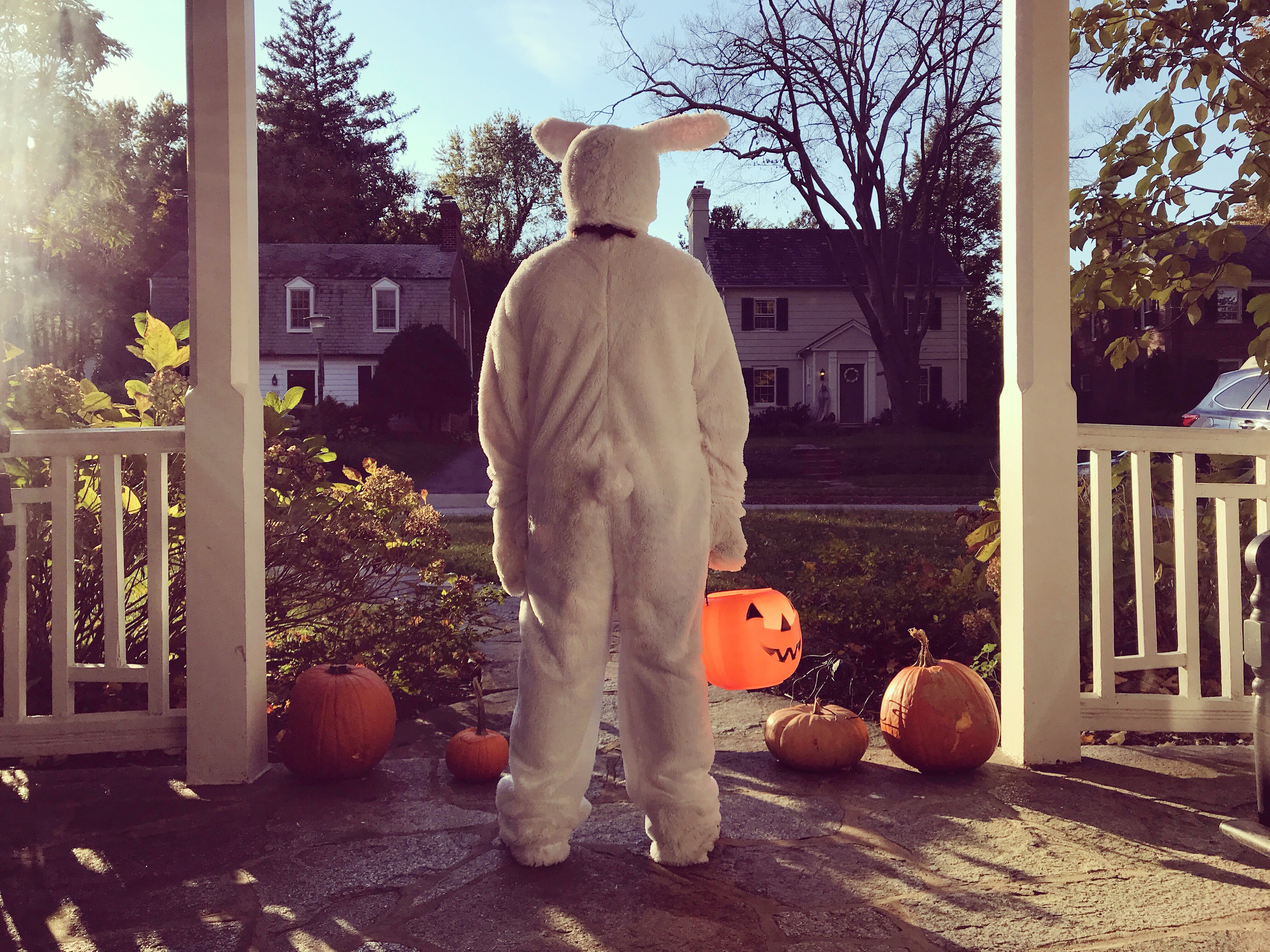 A person in a rabbit costume standing on a suburban porch with pumpkins.