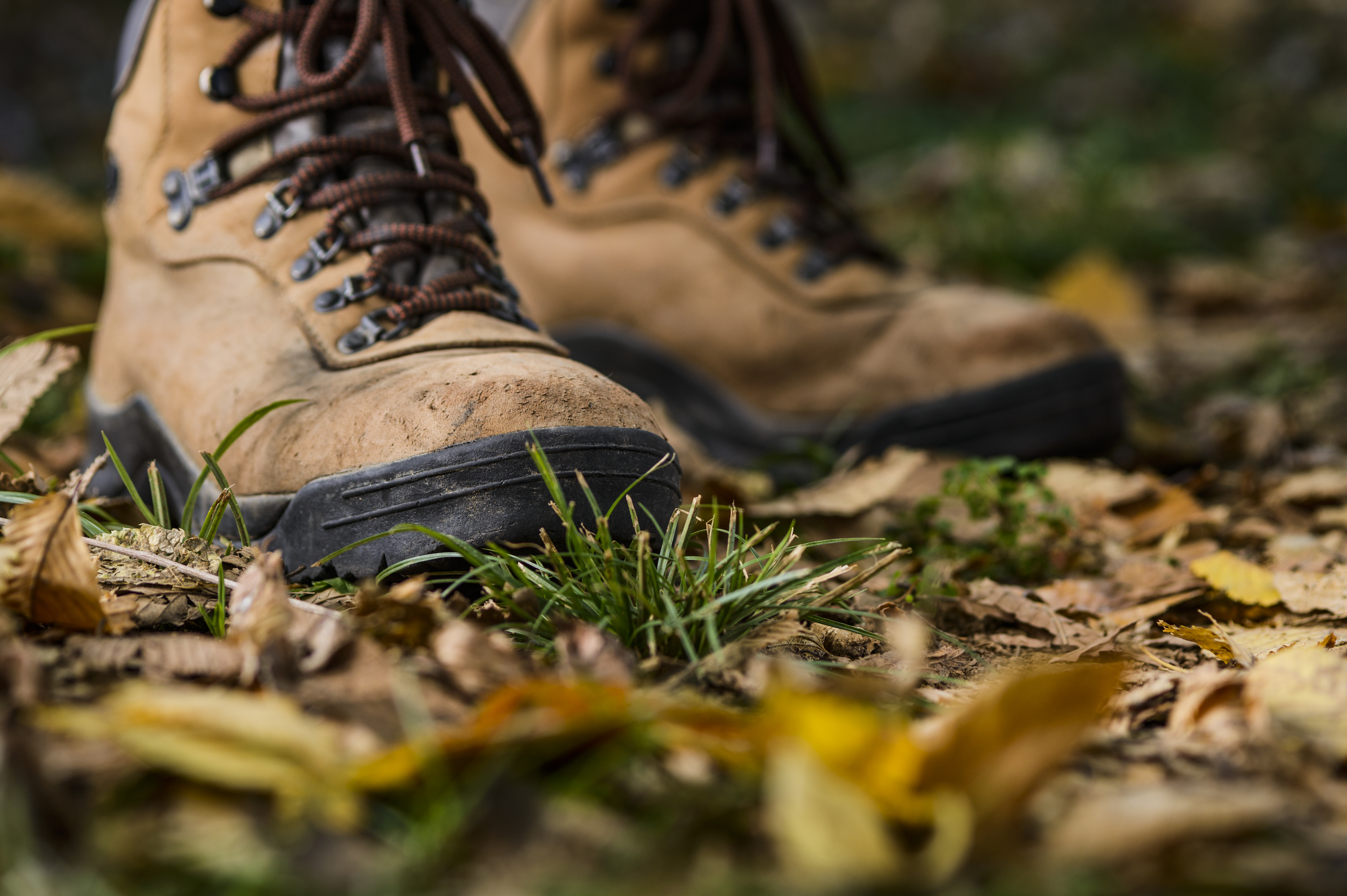 A pair of hiking boots on top of a bed of grass and leaves.