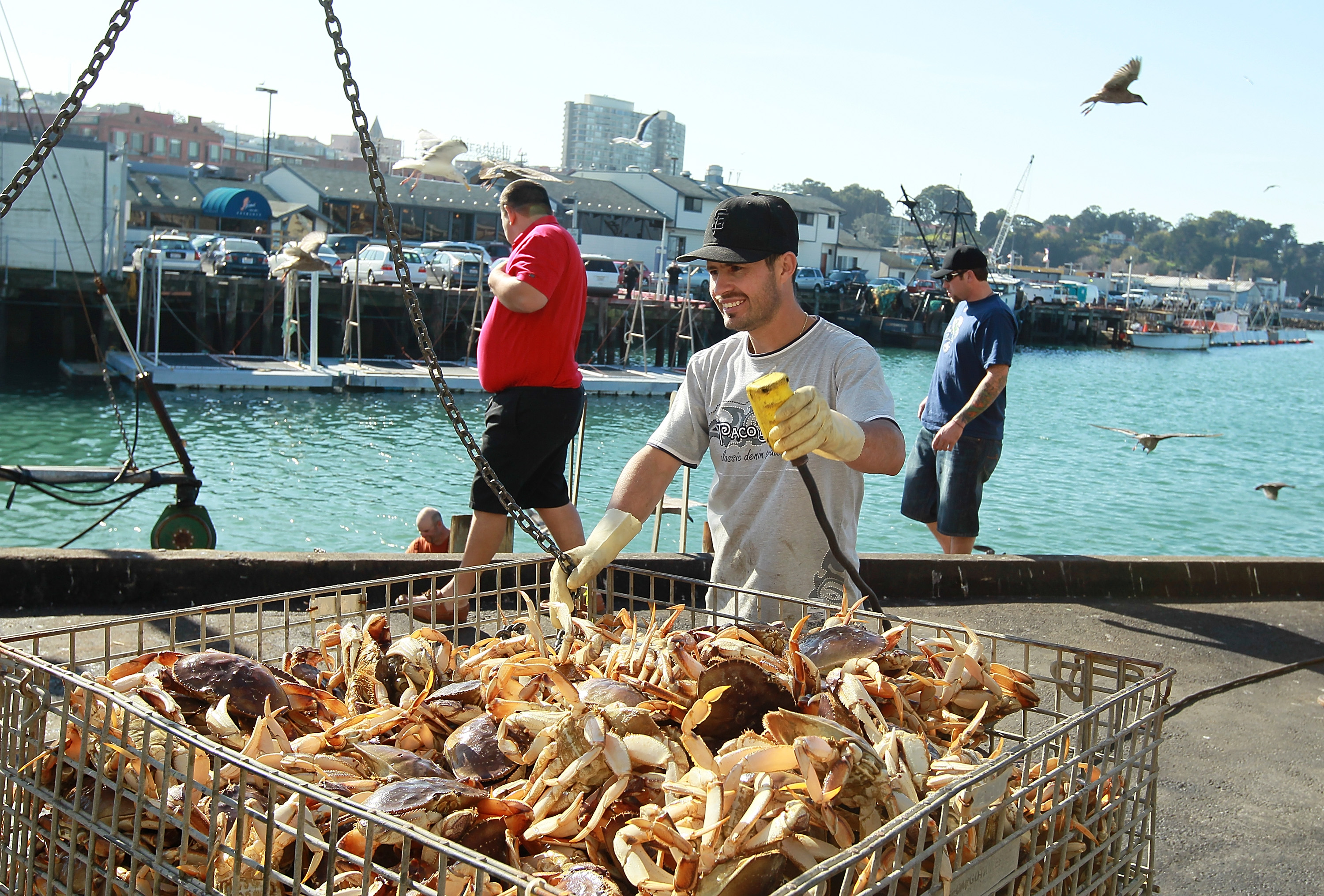 Whale Safety Concerns Might Delay the Commercial Crab Season