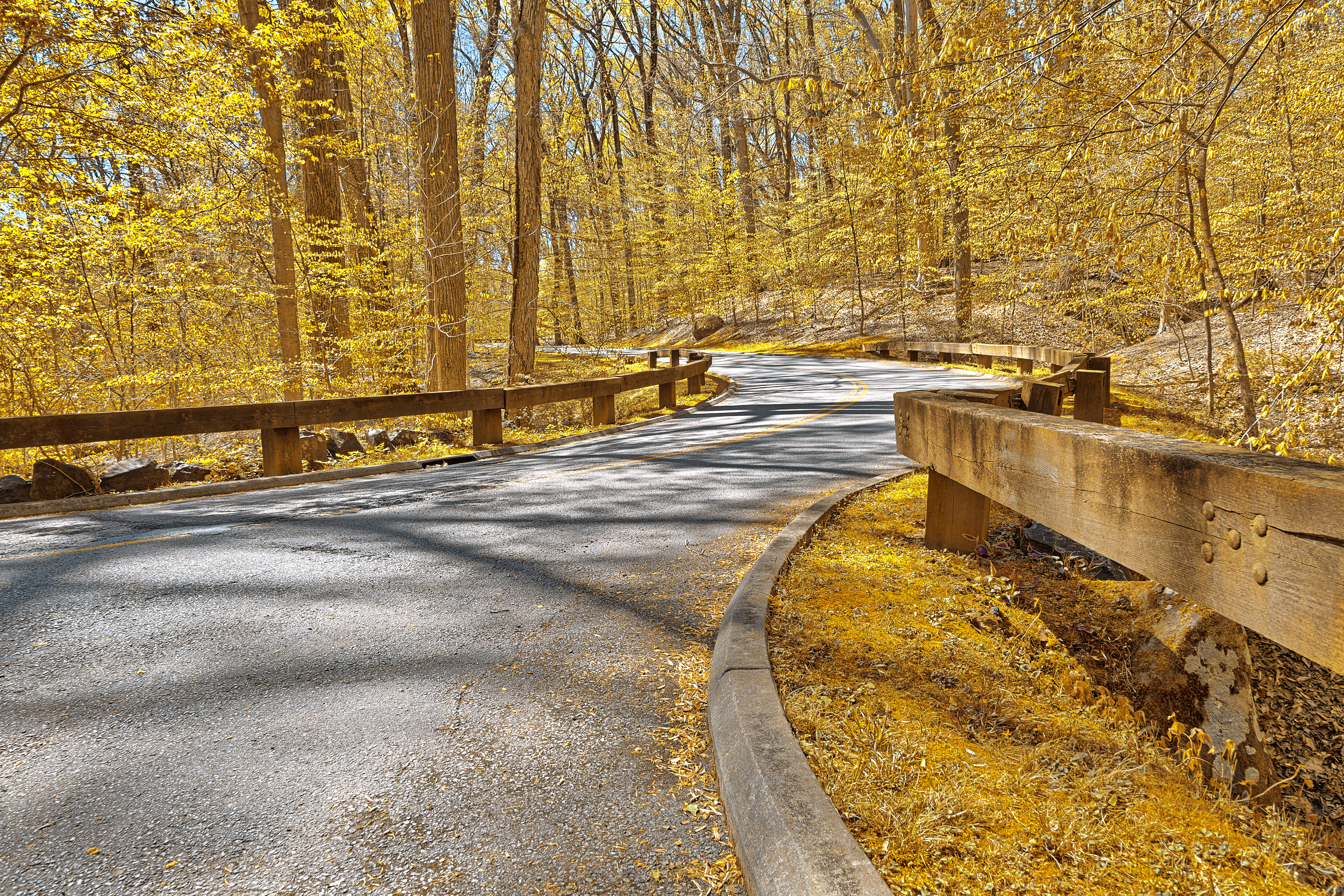 A paved road in the middle of a leafy park in the fall.