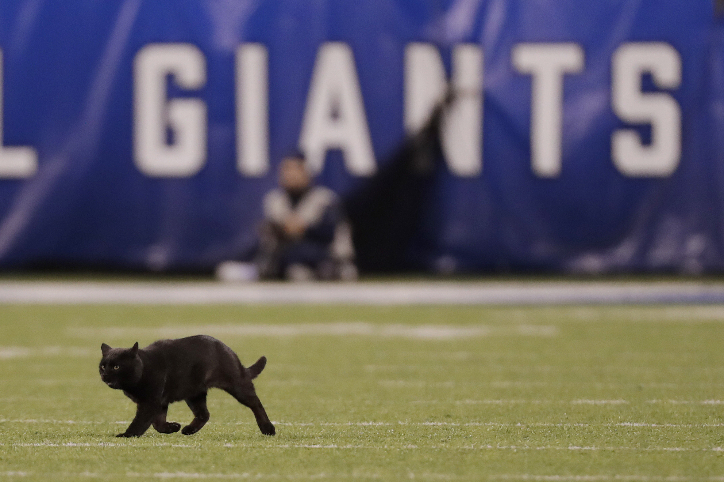 A black cat runs on the field during the second quarter of Monday's Giants-Cowboys game in East Rutherford, N.J.