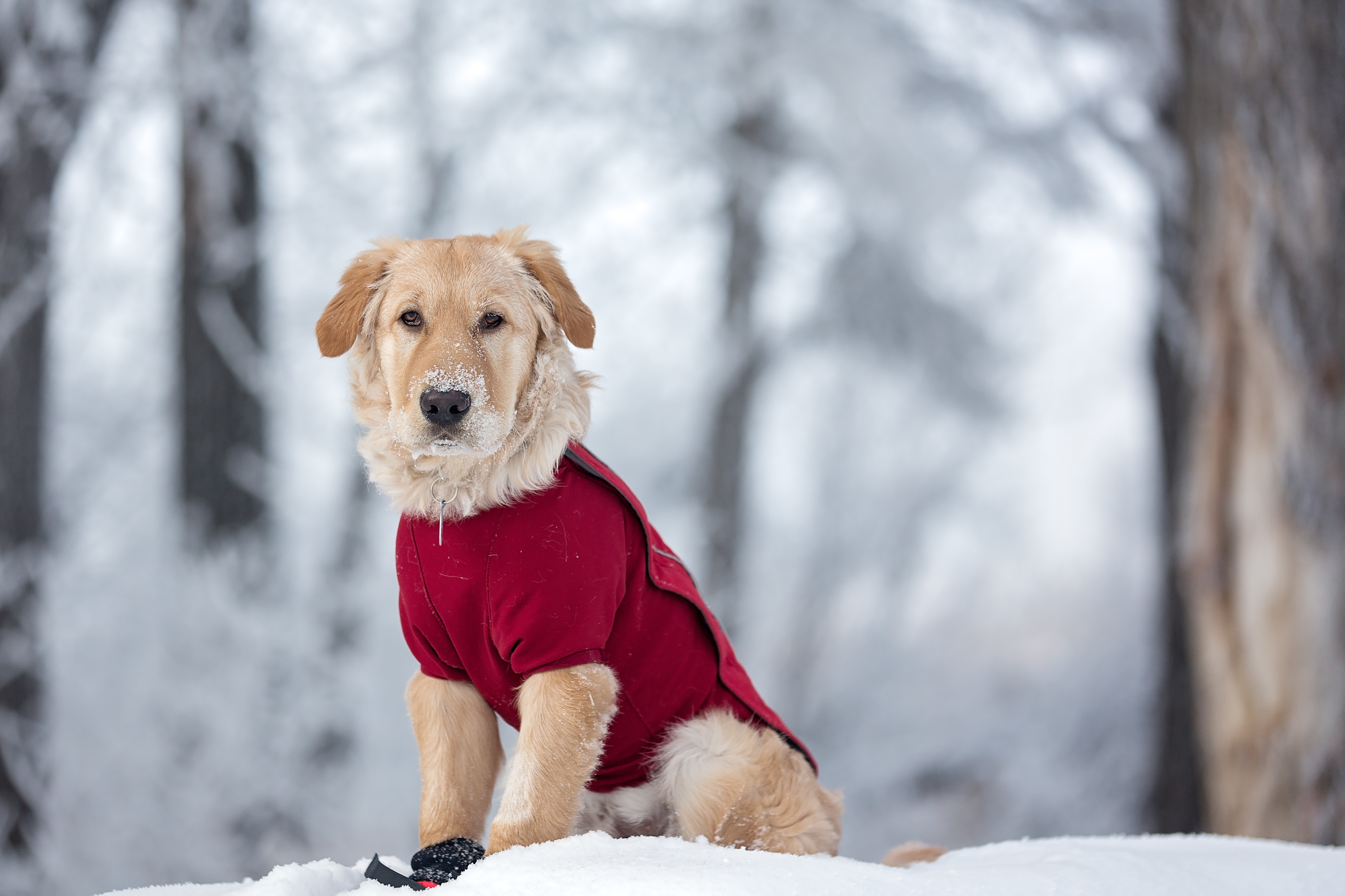 Animal-care experts suggest that if the weather outside is too cold for humans to withstand, they should bring their pets inside and let them out just long enough to do their bodily functions.