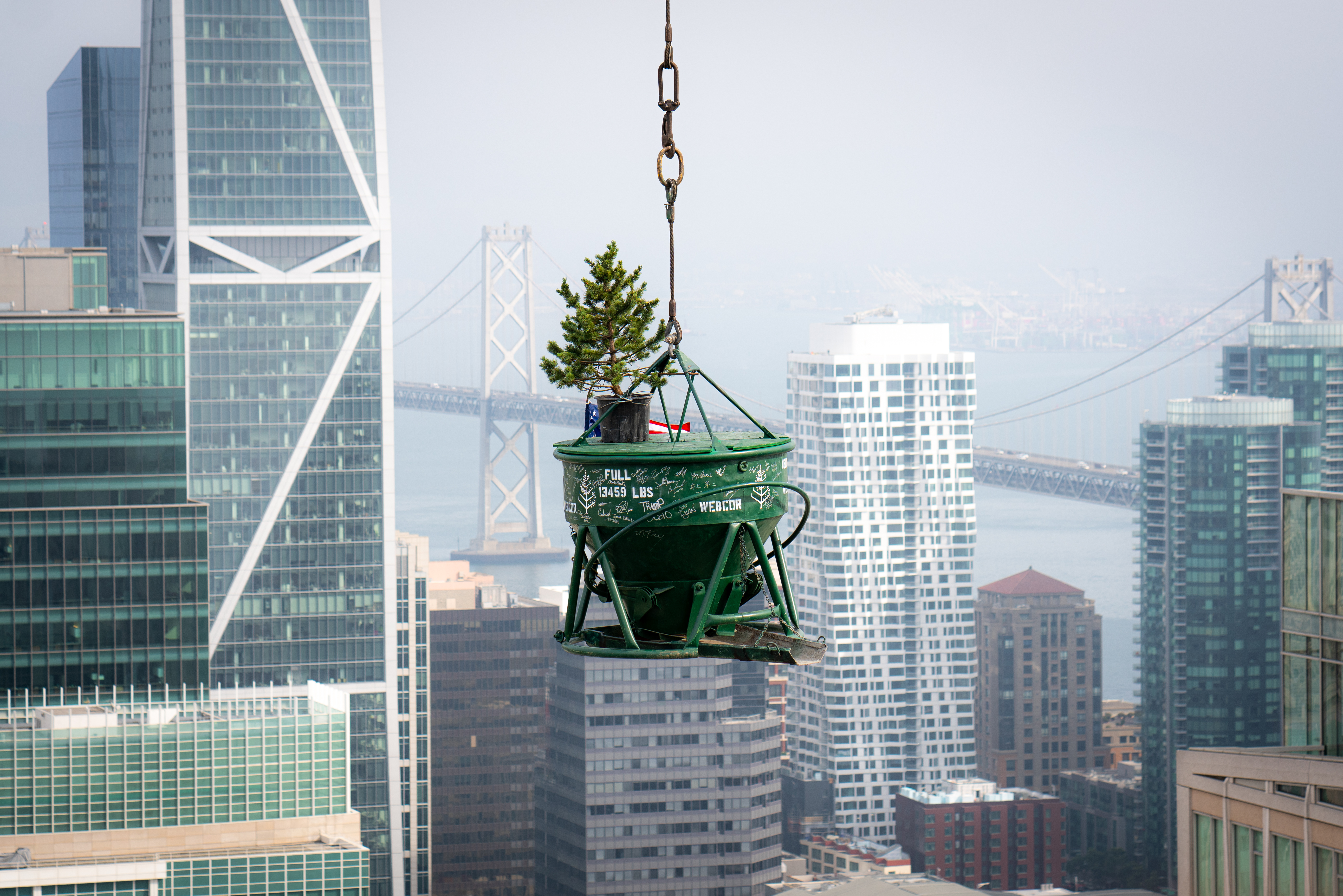 A tree in a bucked on a board being lifted by a rope with views of downtown San Francisco in the background.