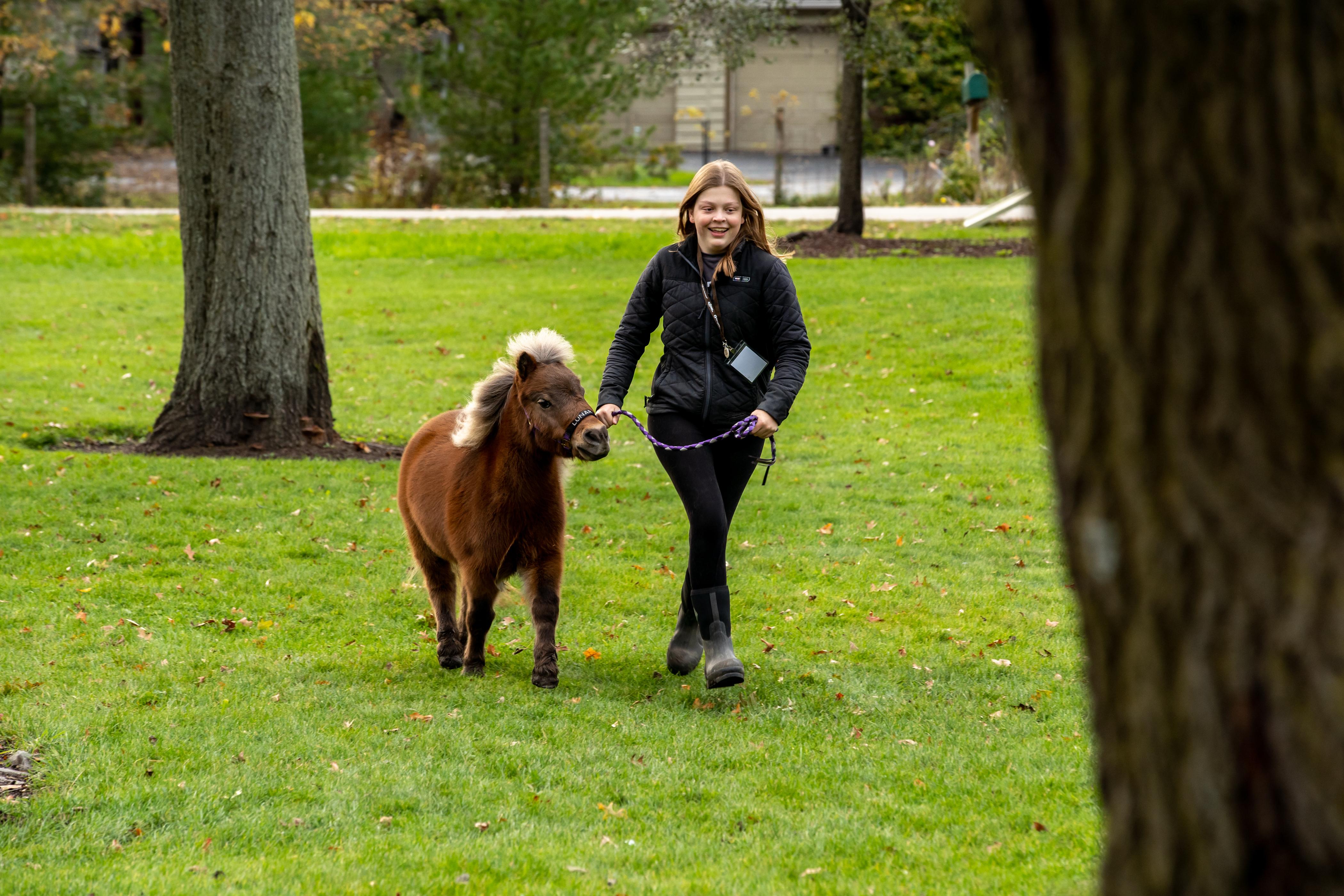 Alyssa Helenowski, 18, of Barrington, Ill., runs with Lunar, a silver bay miniature horse, at SOUL Harbour Ranch.