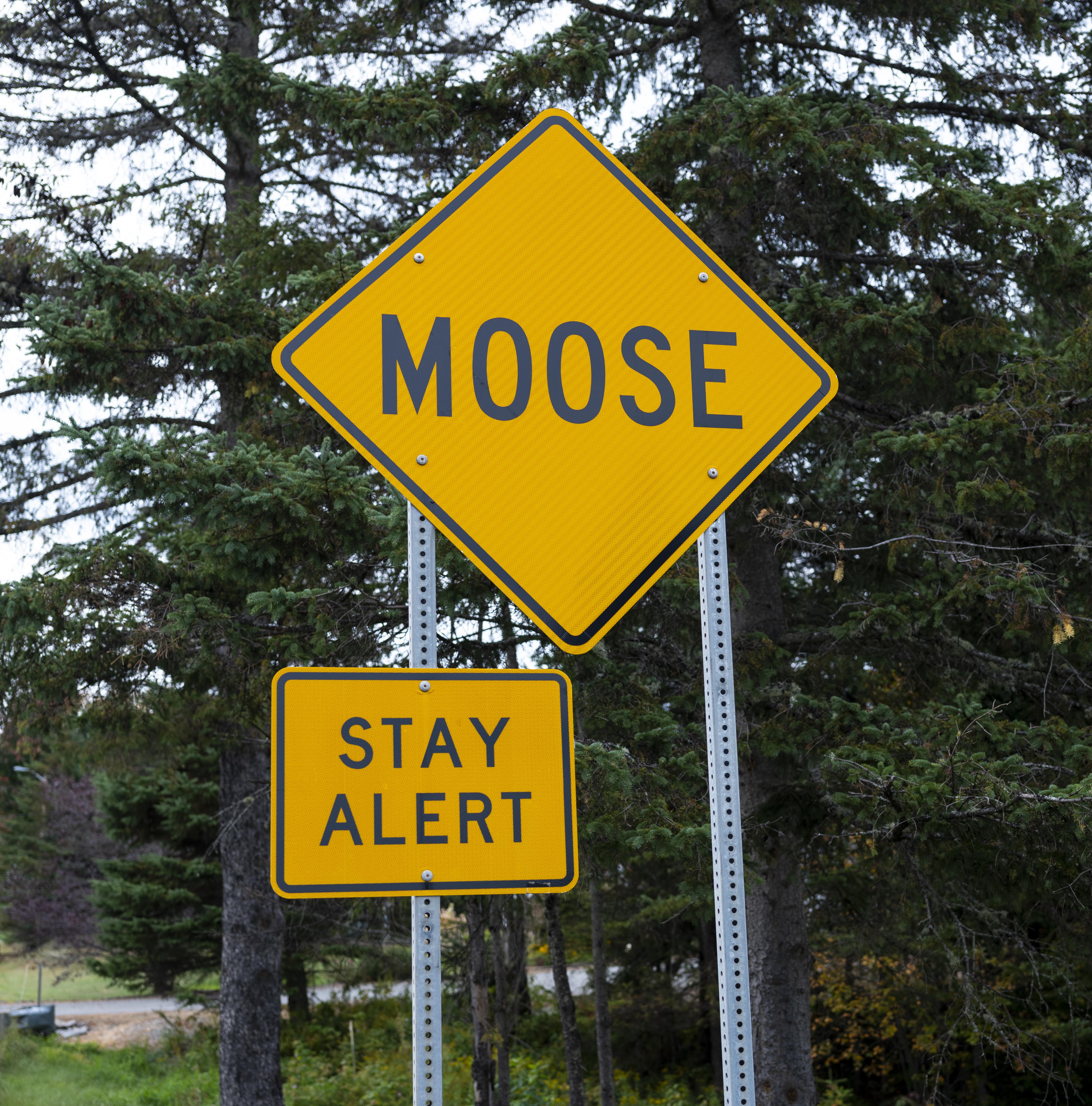 Road Signs Warn Of Moose