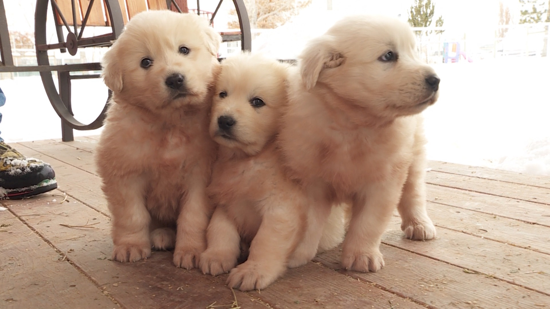 The CDC warned this week that puppies may be causing an outbreak of an infection across multiple states.
