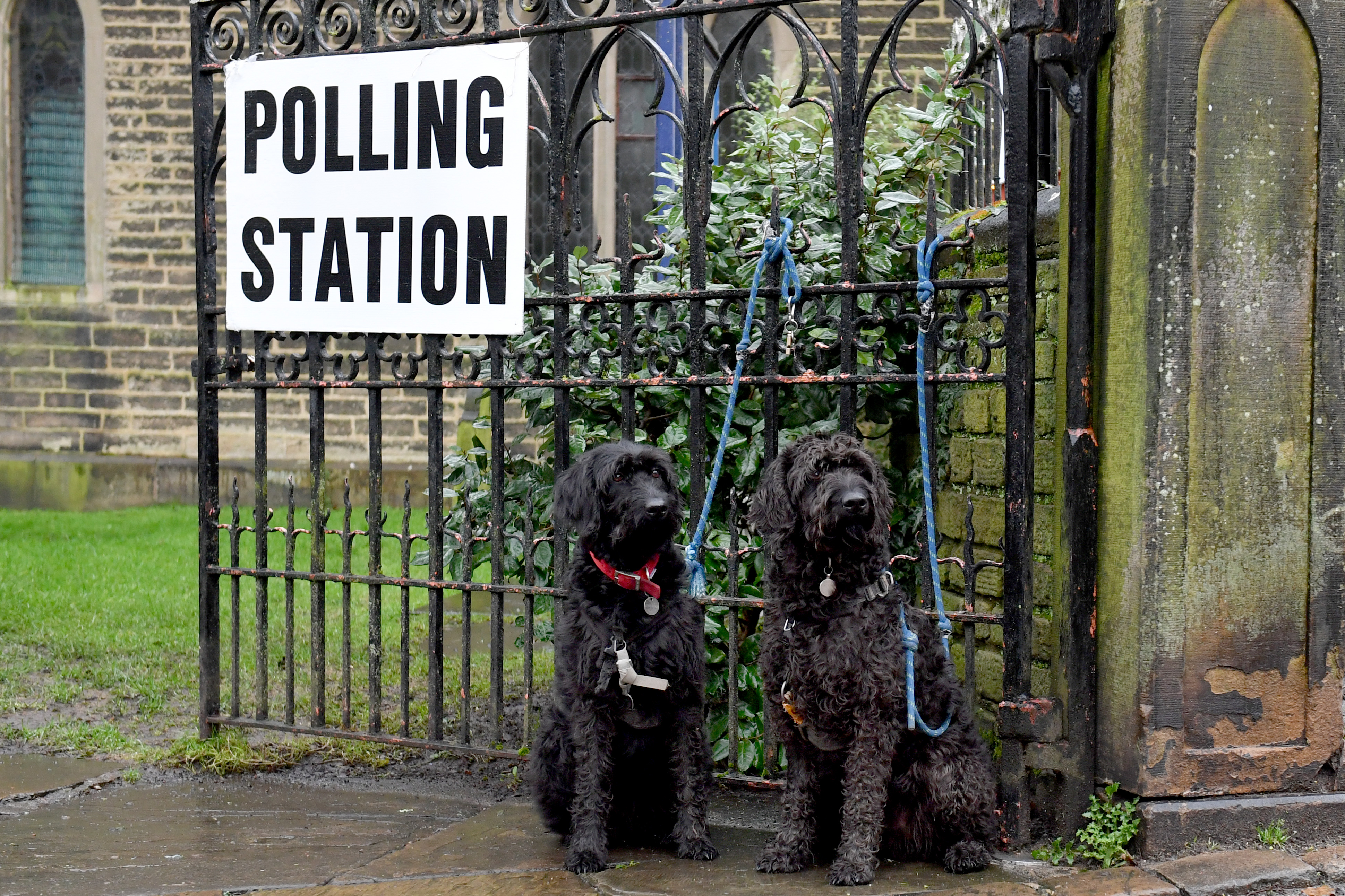 The UK has the best voting tradition: dogs at polling stations