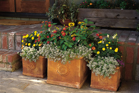 Three pots with flowers in a container garden.