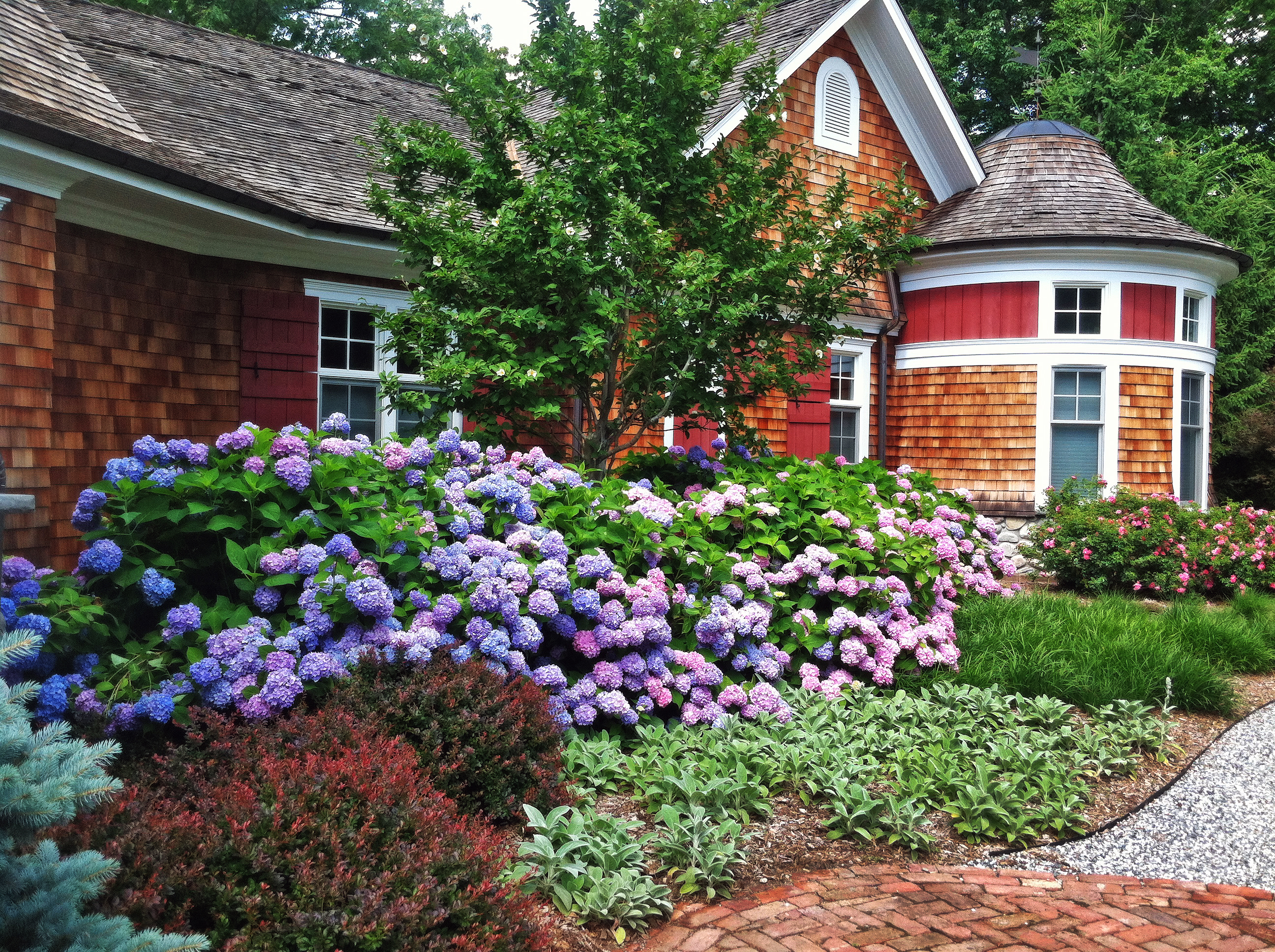Beautifully landscaped Hydrangea Garden in front of a cedar style victorian house.