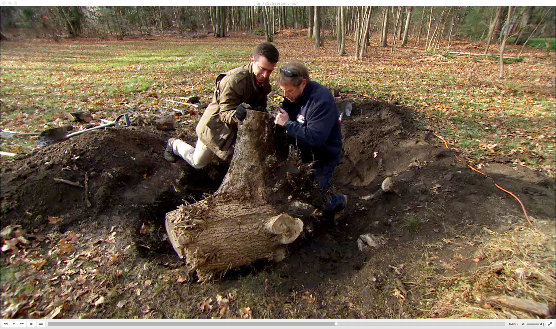 Homeowner removing a tree stump.