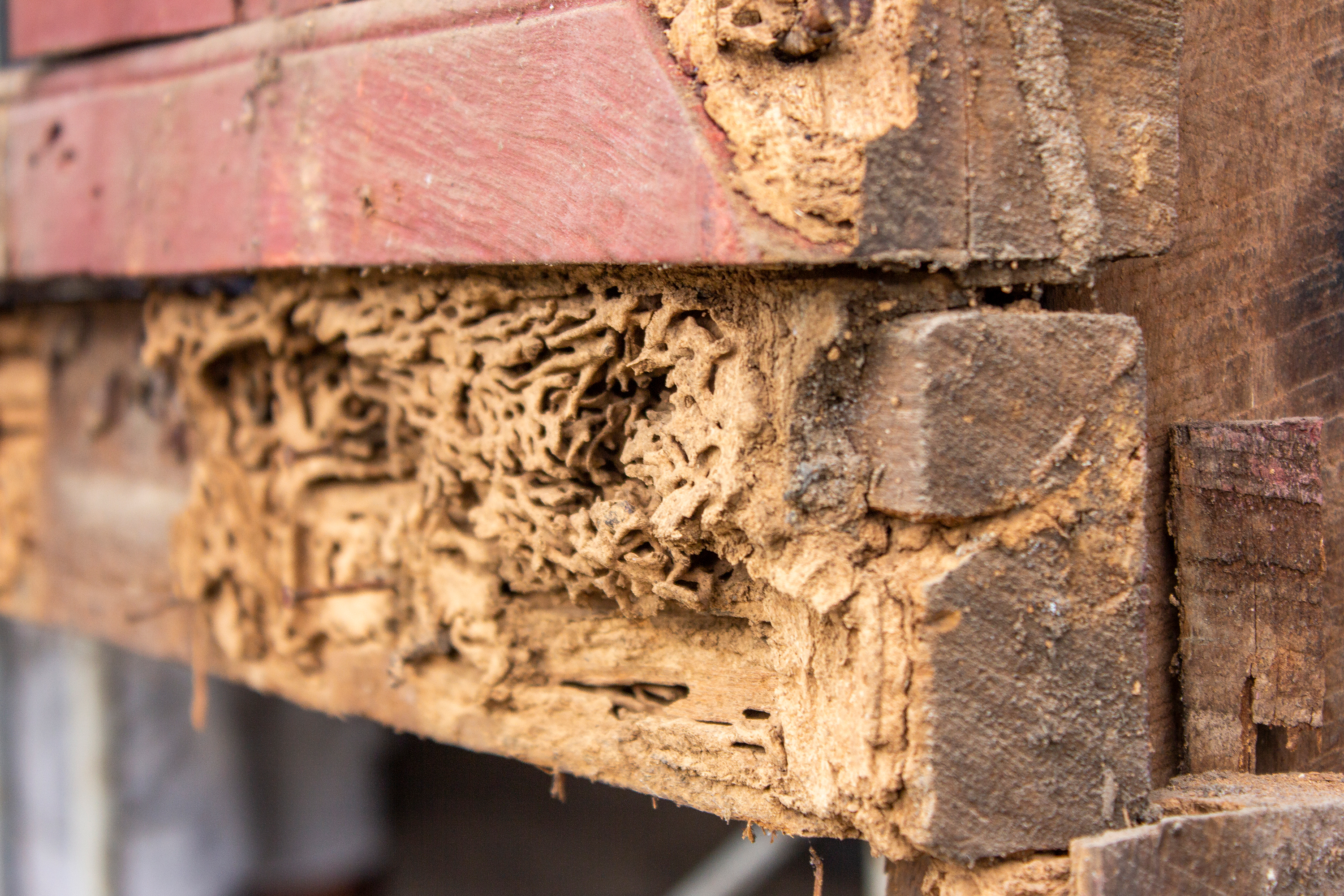Wood rotten from termites.
