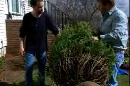 Two people planting a shrub in front of a house.