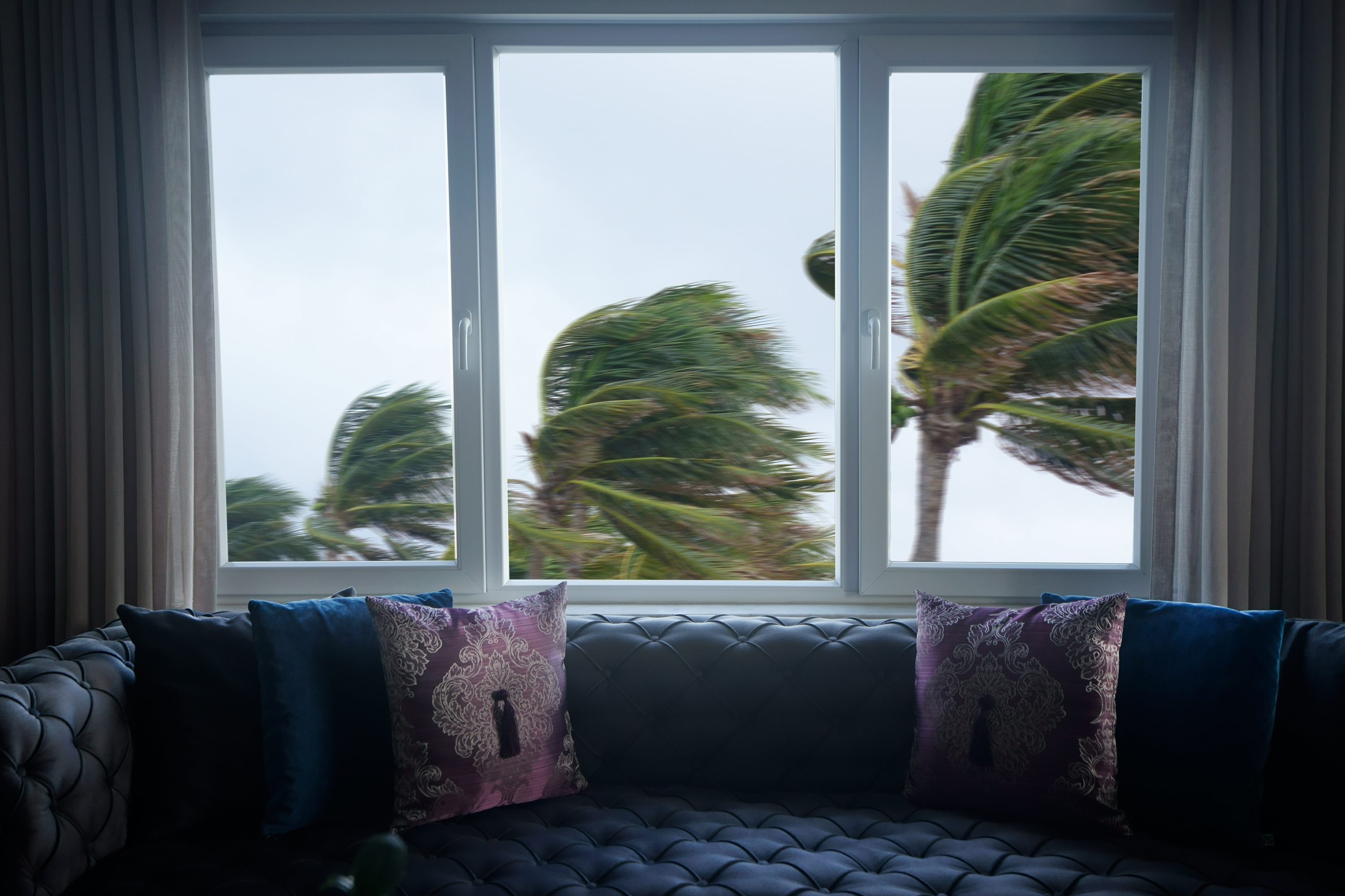 View of palm trees blowing in the wind outside the window.