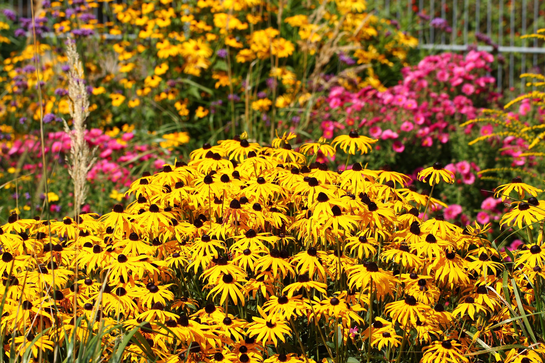 Fall flowers in garden