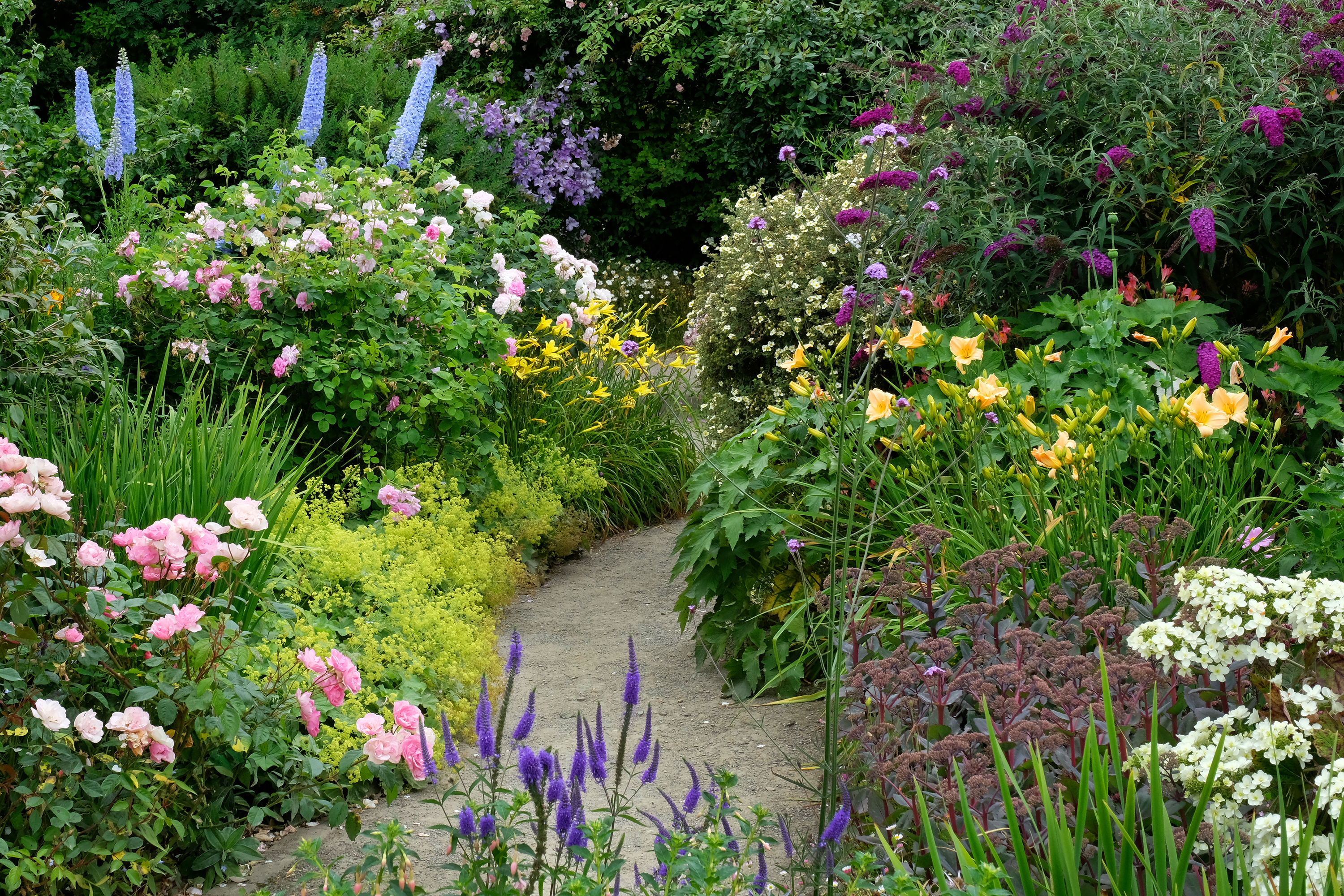 Lush garden with a variety of flowers.