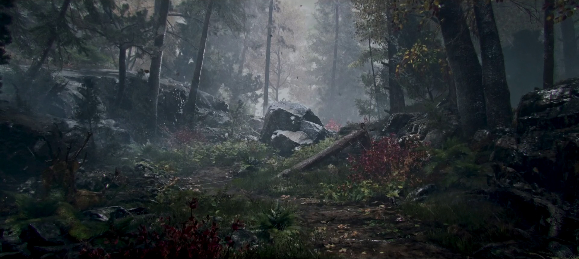 a forest in the rain in Prologue