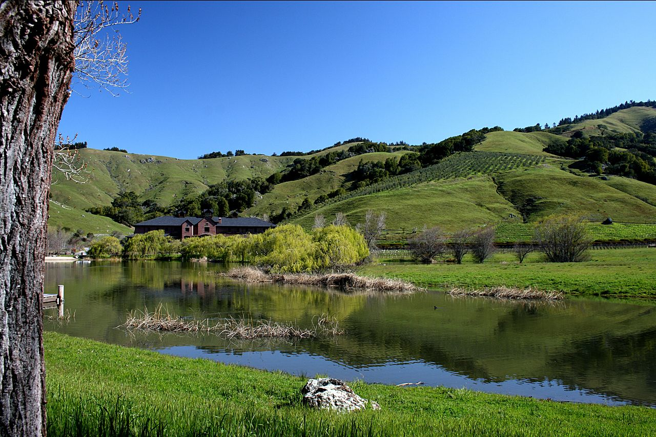 Sprawling green hills, with a small pond in the foreground and planted vineyards visible in the distance.