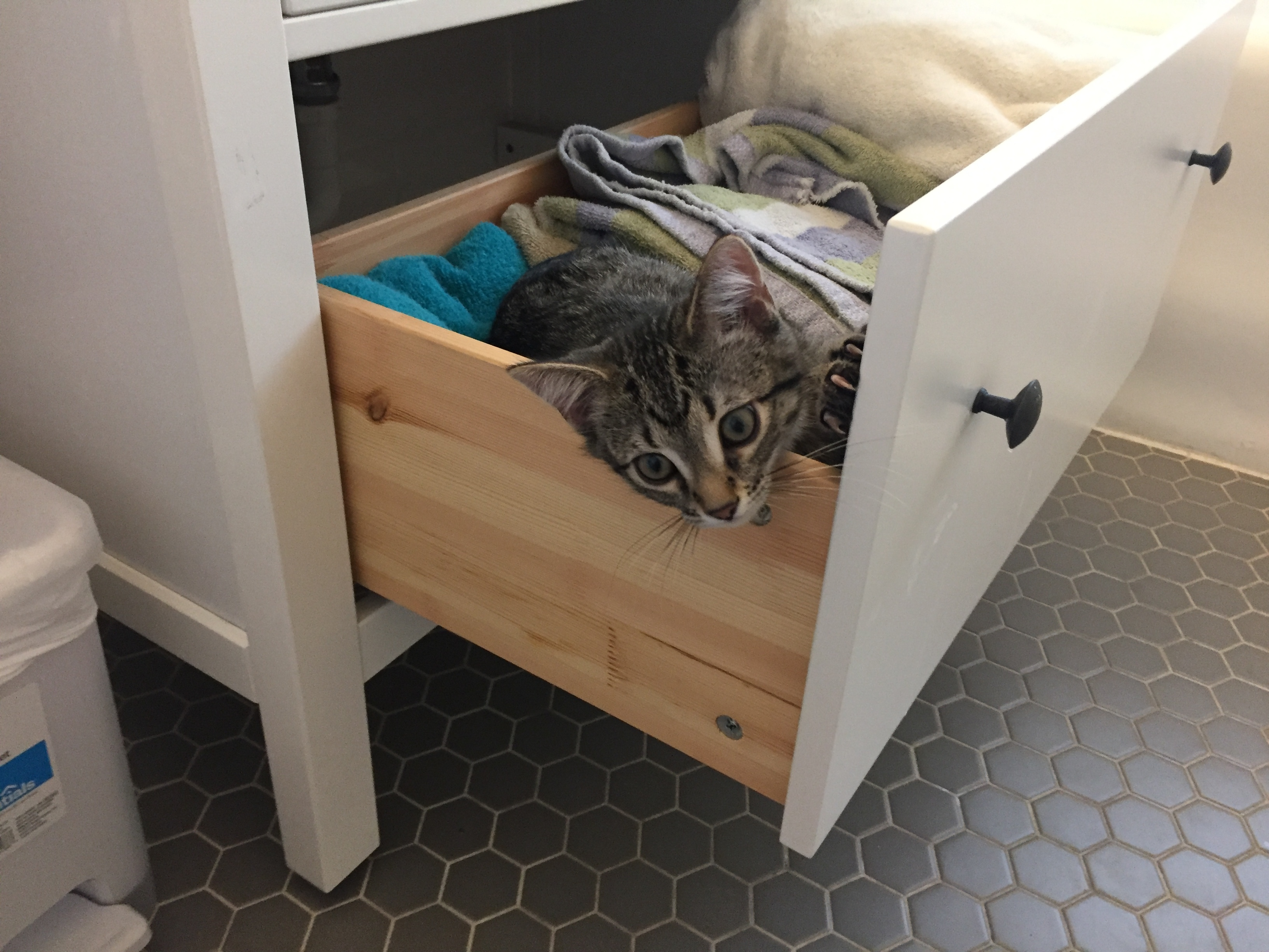 Shadow the cat, the newest edition to the Esposito family, takes refuge in a drawer full of bath towels.