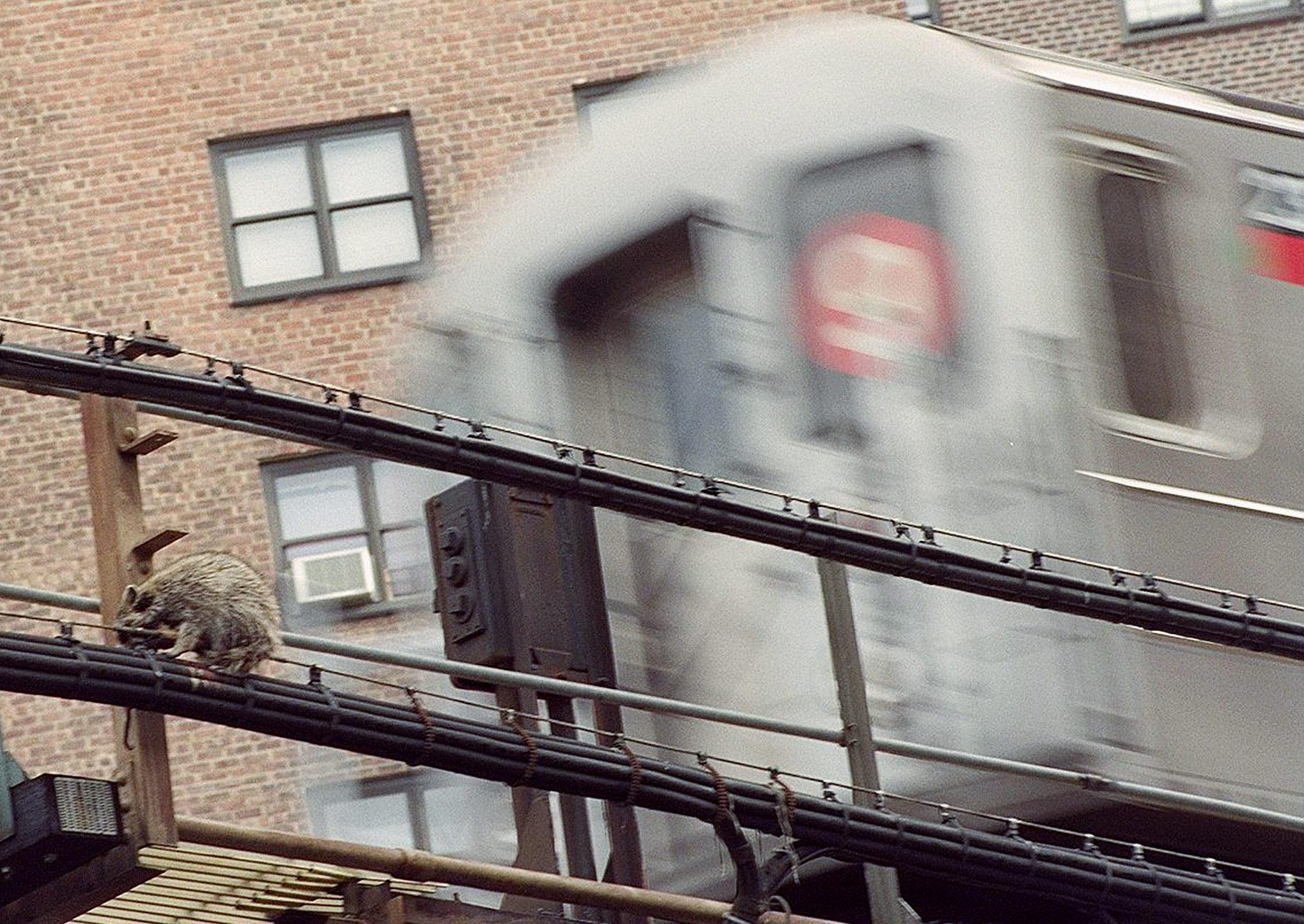 Wayward animals caused 238 subway delays in 2019