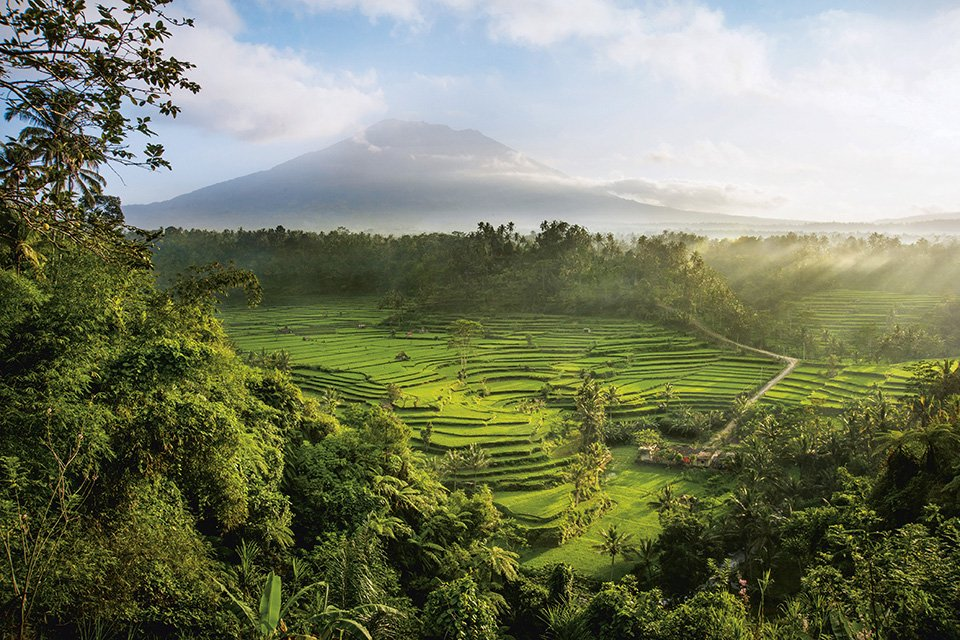 An aerial view of rice terraces in the mountains of Bali.
