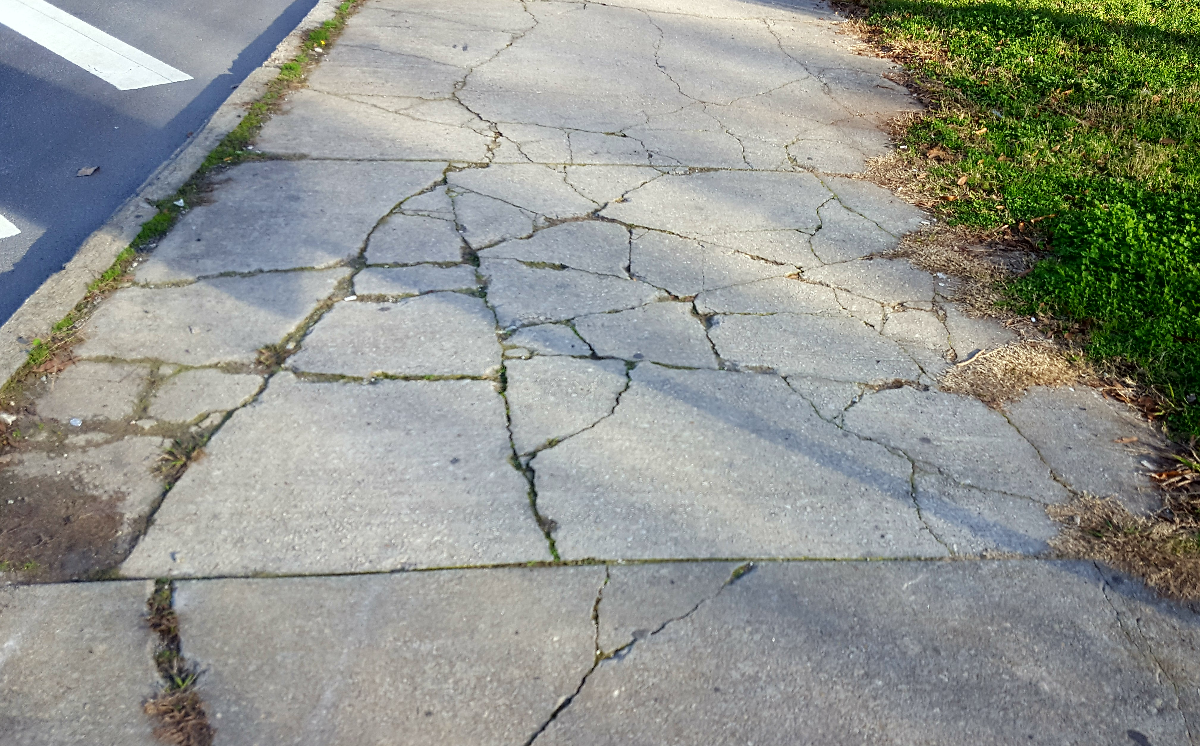 A picture of a cracked sidewalk.