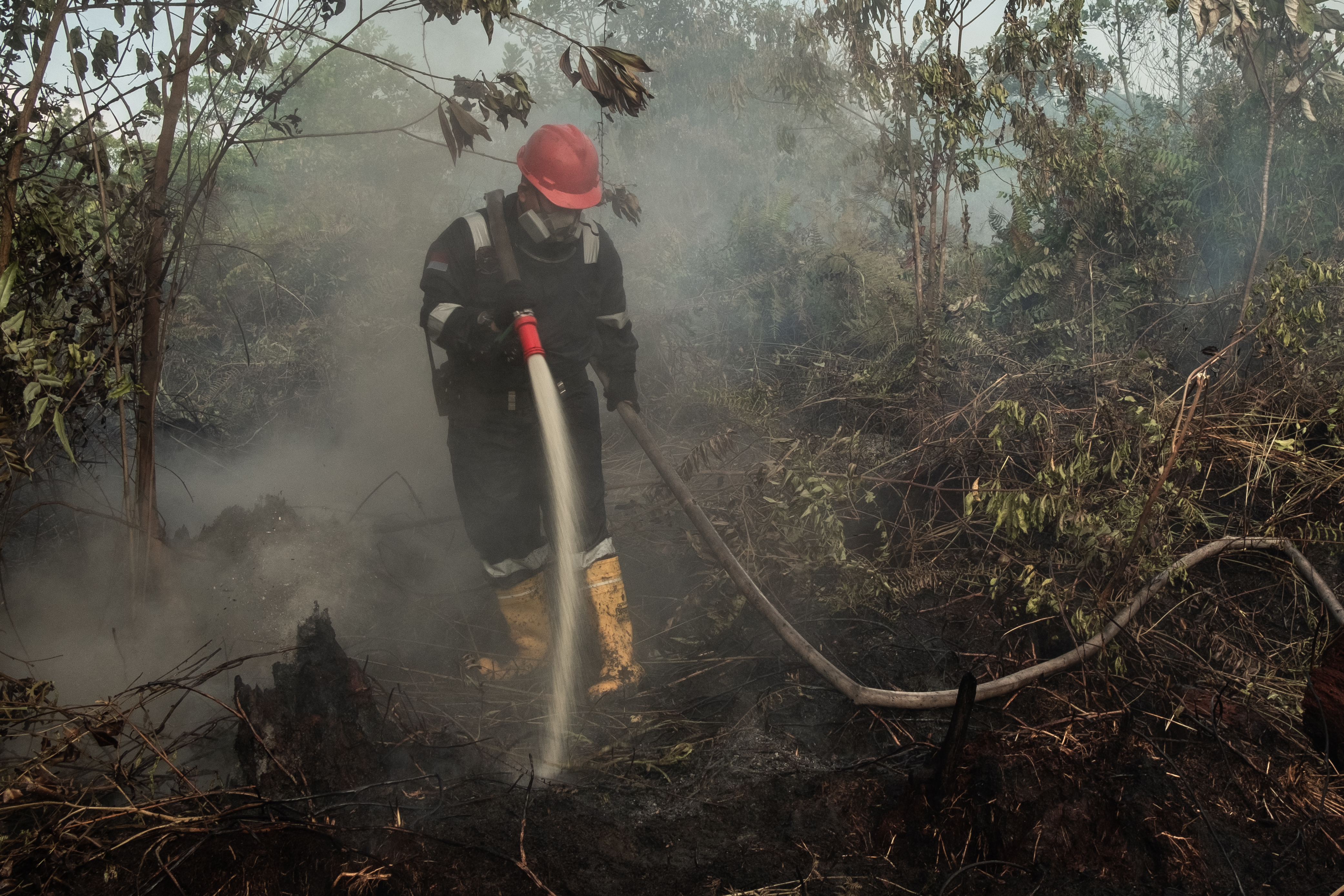 Forest Fire Returns To Riau