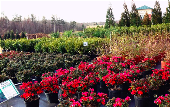 A nursery full of plants and trees with a row of woods behind it.
