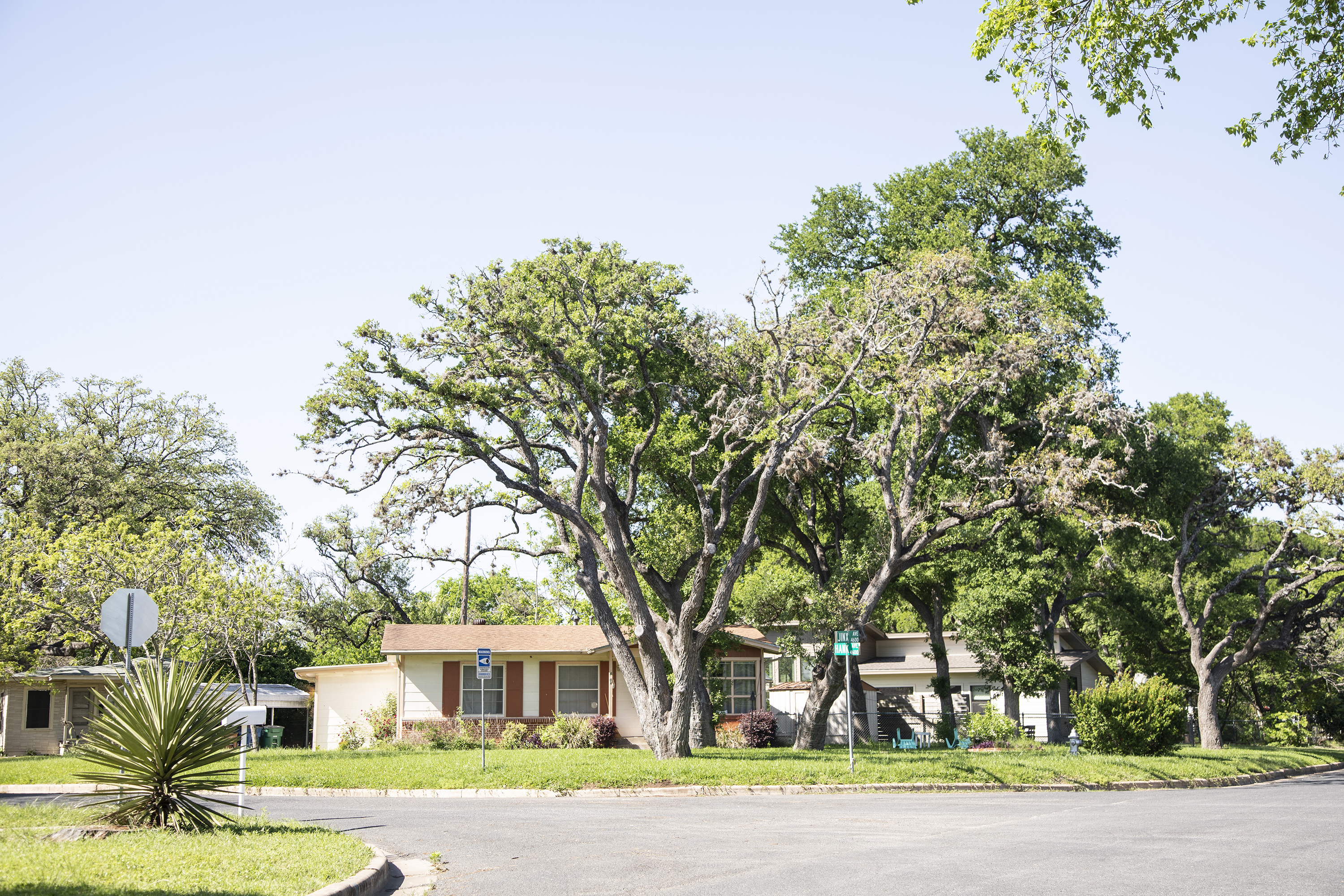 A ranch style home in an Austin neighborhood, with a very large green tree in the front yard and lush vegetation around.