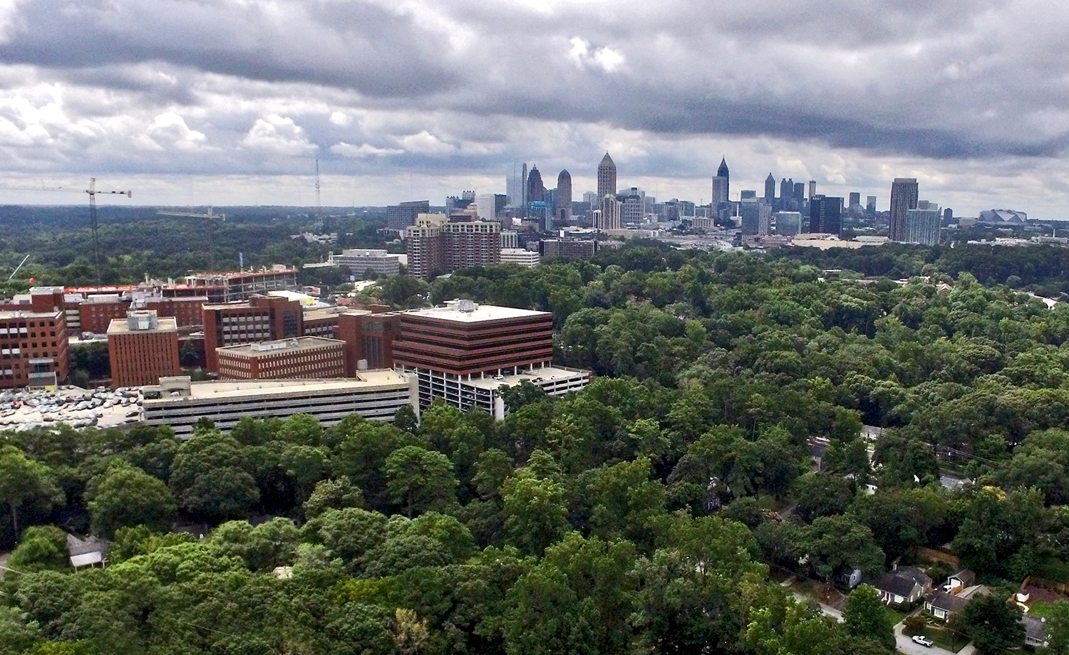 A large swath of trees dominate the foreground with city buildings in the background.