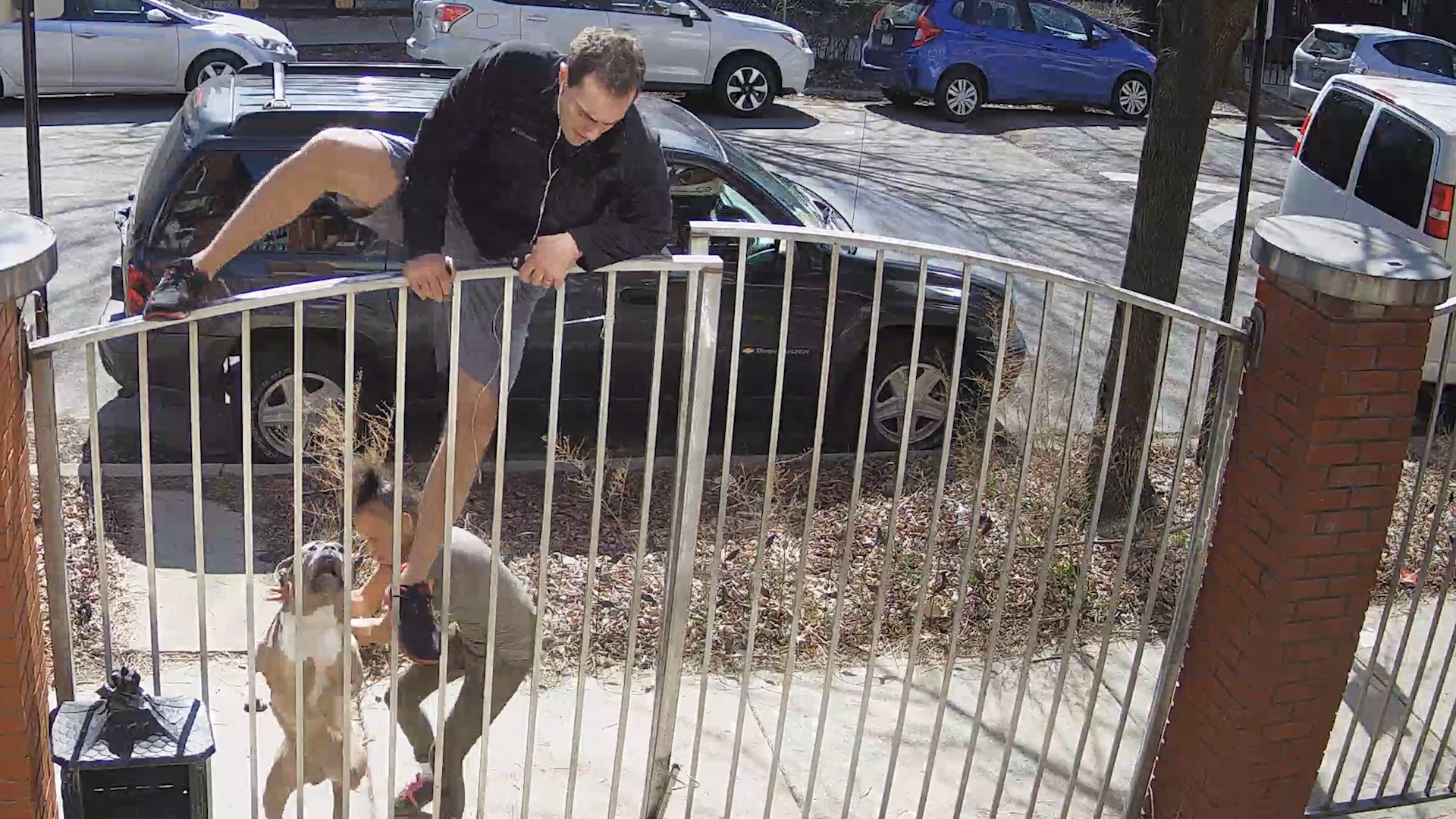 Nick Massuci escapes a pit bull attack on a North Side sidewalk by hopping on top of a fence.