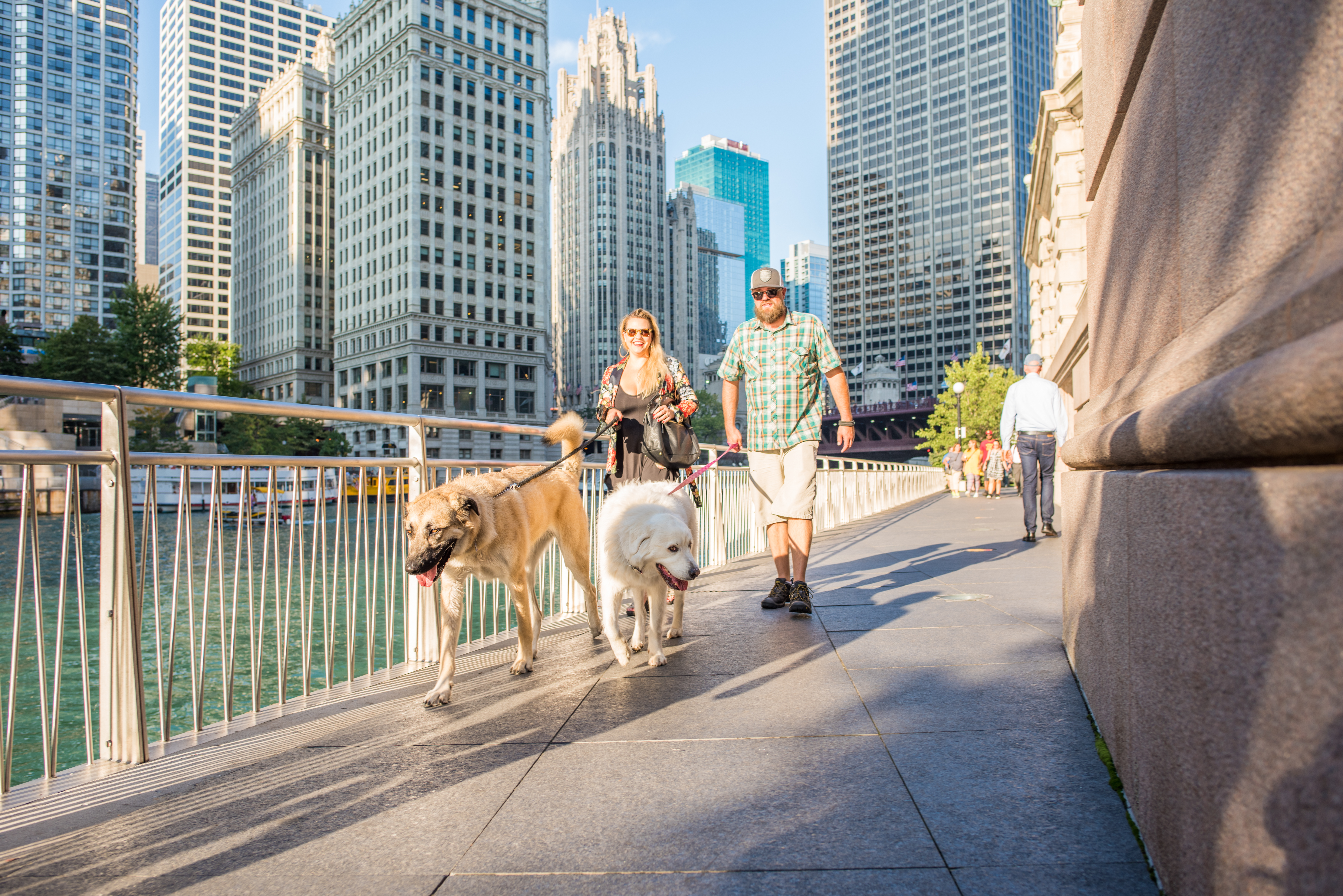 Two people walk their dogs along the riverwalk in Chicago.