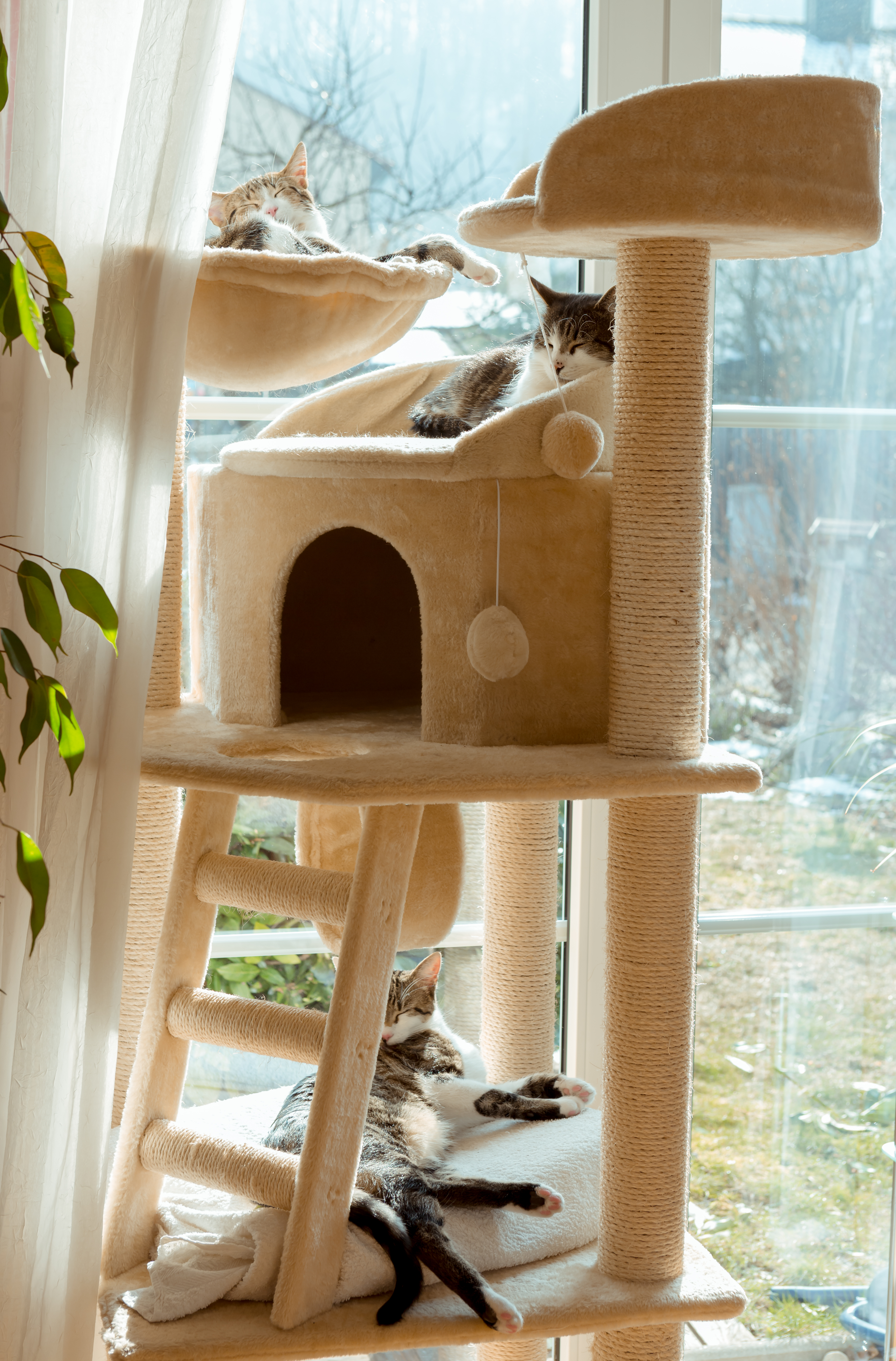 Two Cats Sleep On A DIY Cat Tower