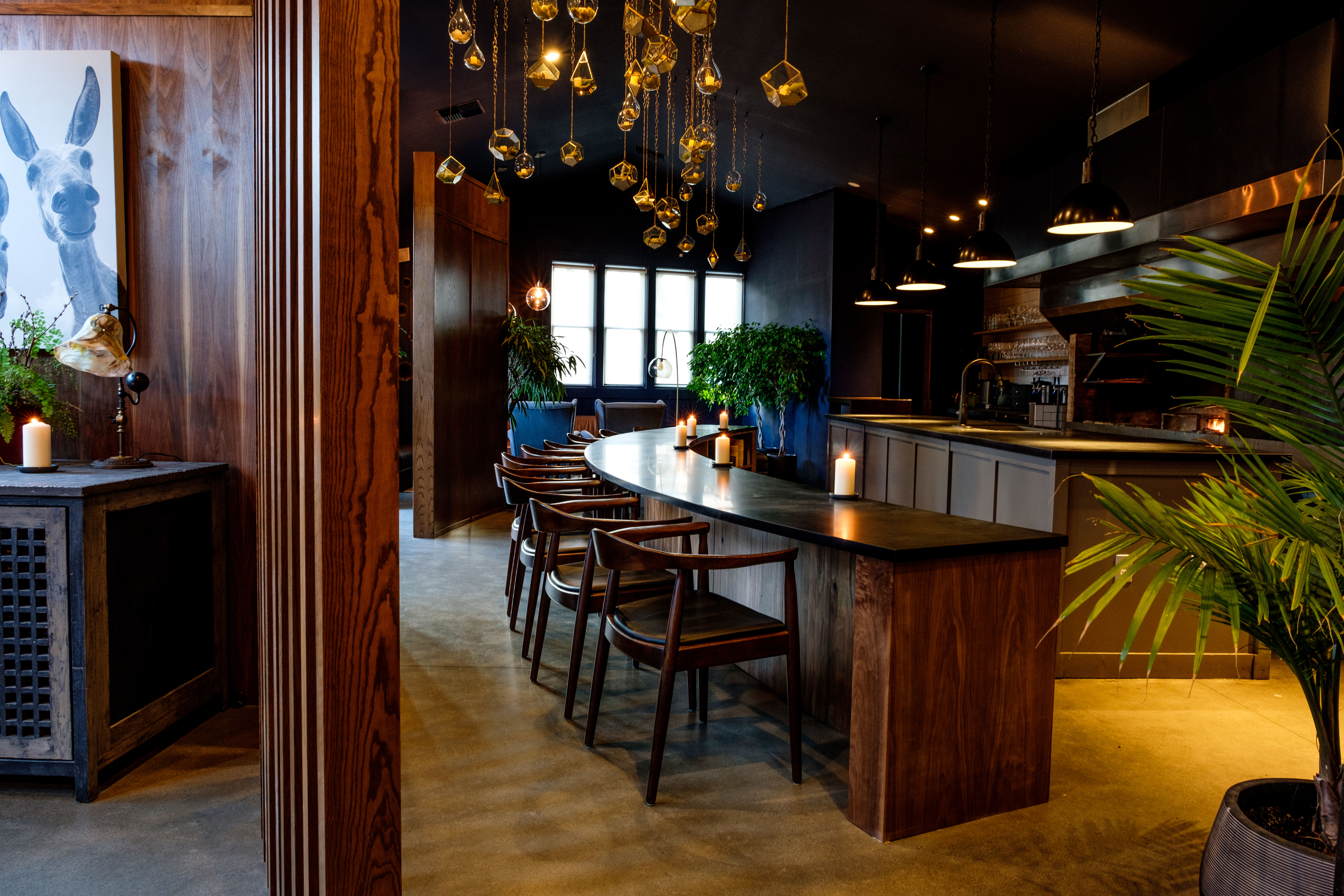 The plant-filled dining room at Tarsan i Jane, with dangling lights and a dark wood counter.