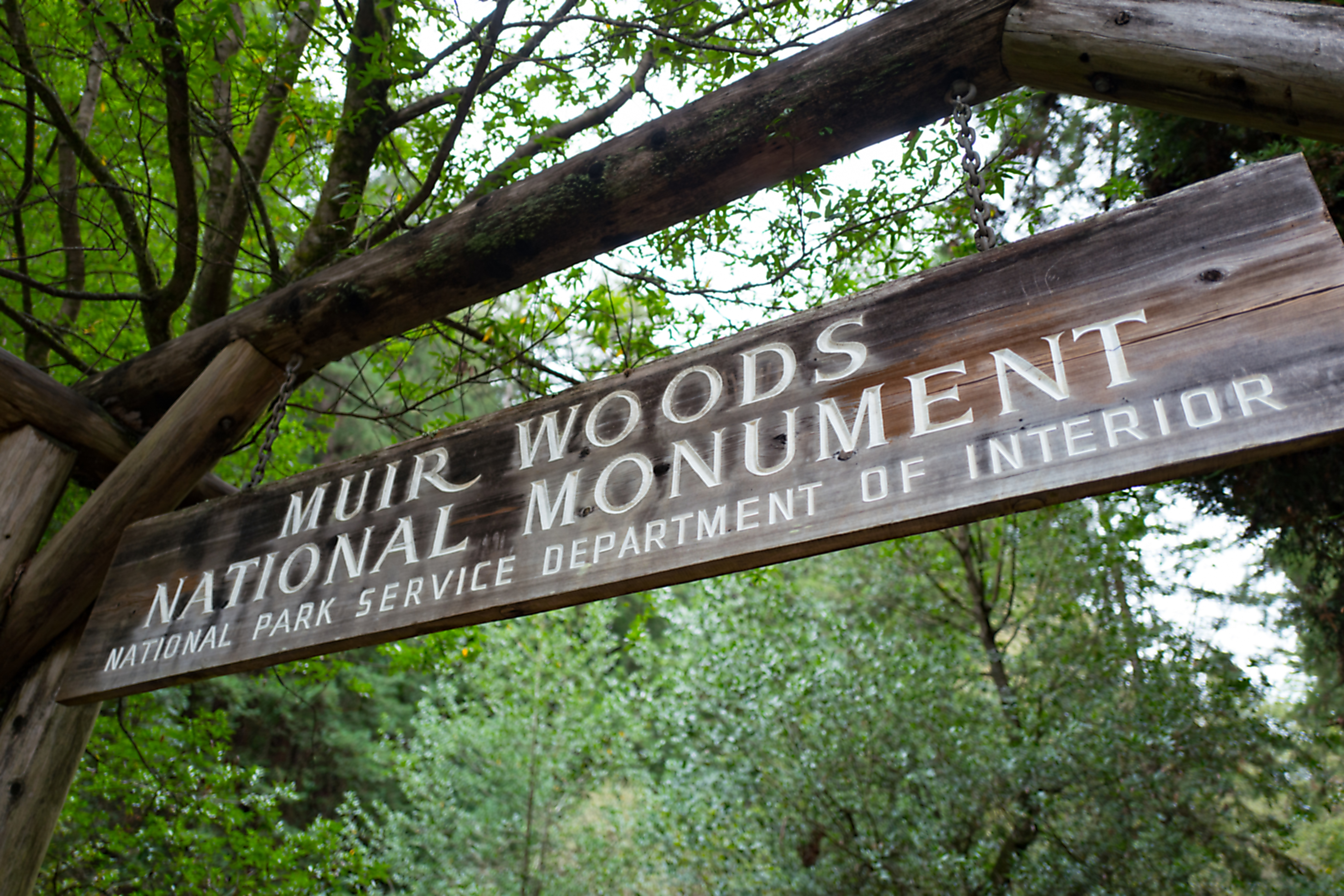 """A carved wooden sign that reads """"Muir Woods"""" against a backdrop of redwood trees."""