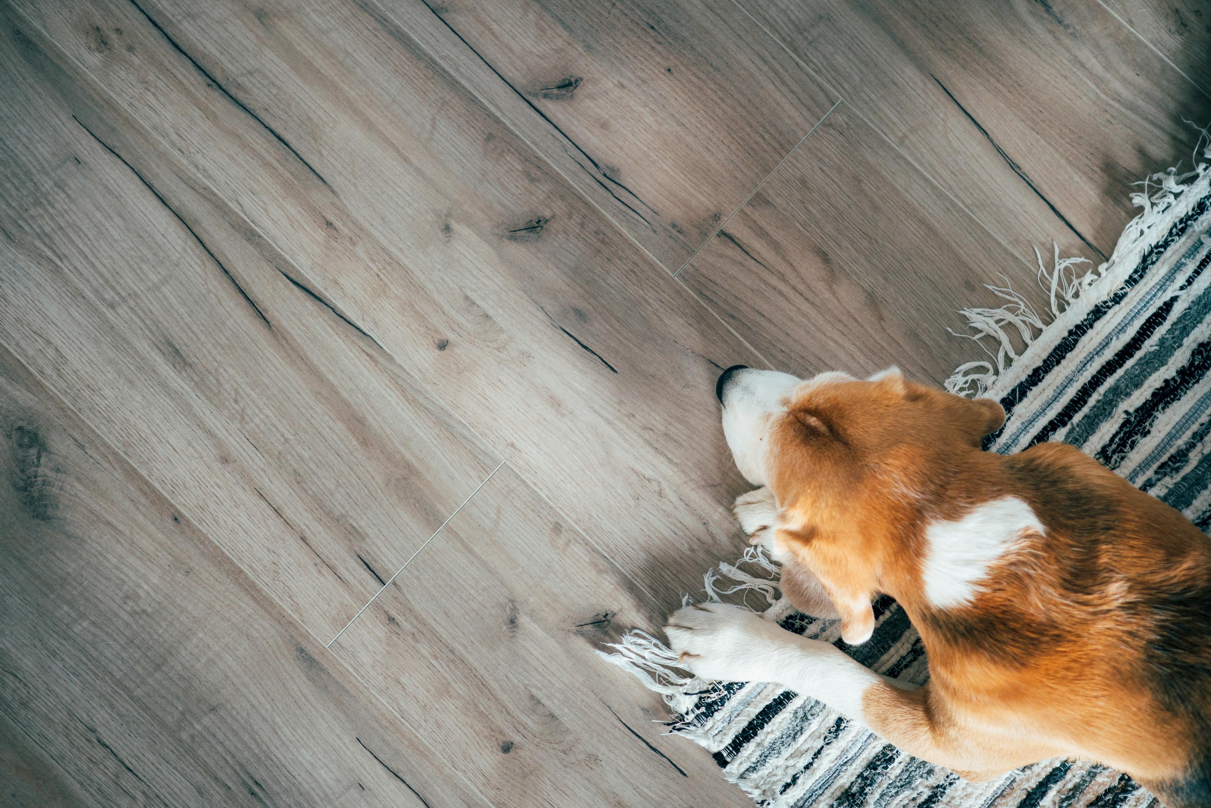 Laminate Flooring with Dog
