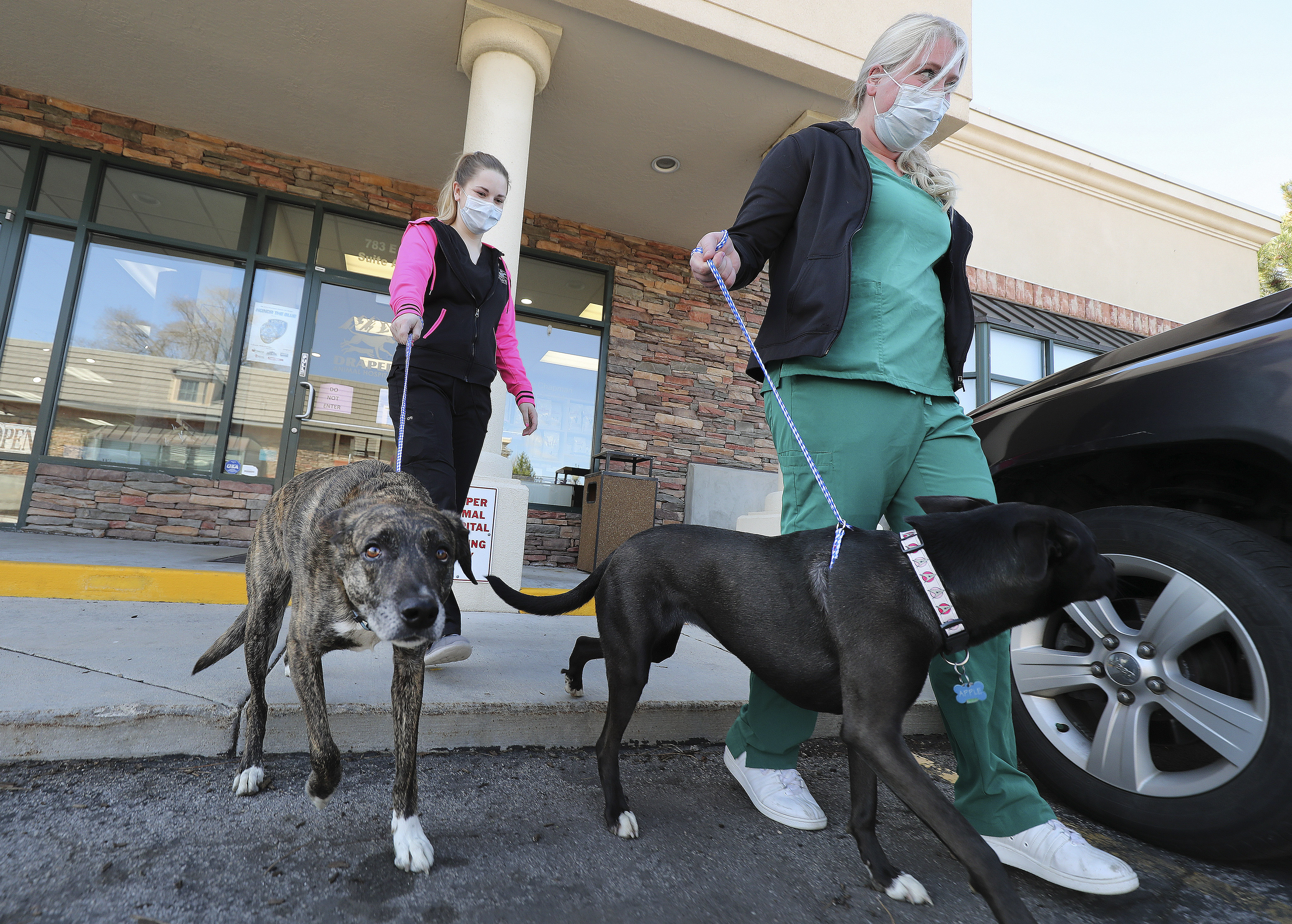 Vet technicians Jessica Allen and Tiffany Marvos take dogs to their owner curbside at Draper Animal Hospital in Draper on Wednesday, April 1, 2020. Animal health care providers are trying to minimize exposure during the coronavirus pandemic.