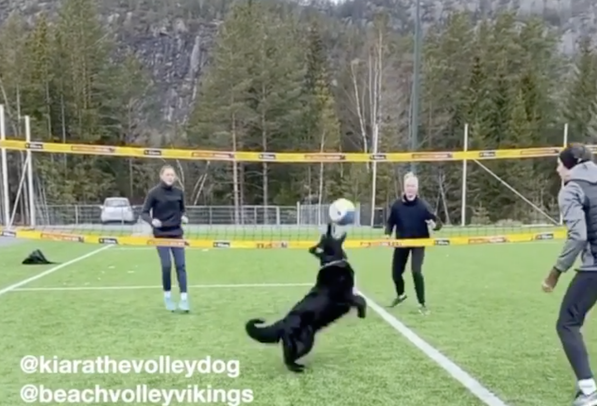 Screenshot of Kiara, the volleyball dog, setting up a spike in front of a yellow volleyball net.
