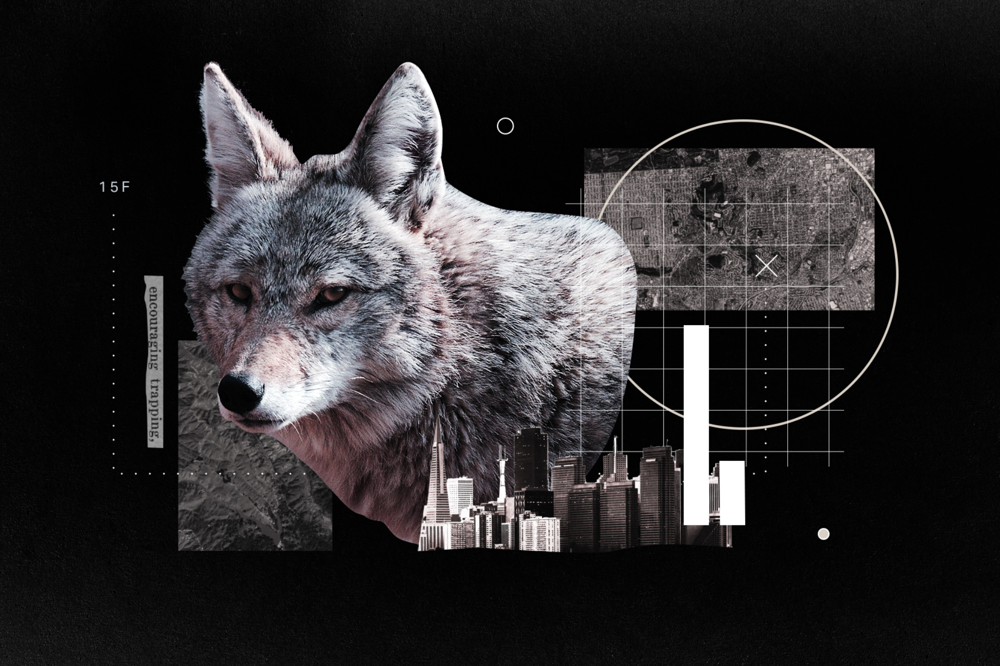 collage of a coyote and a cityscape