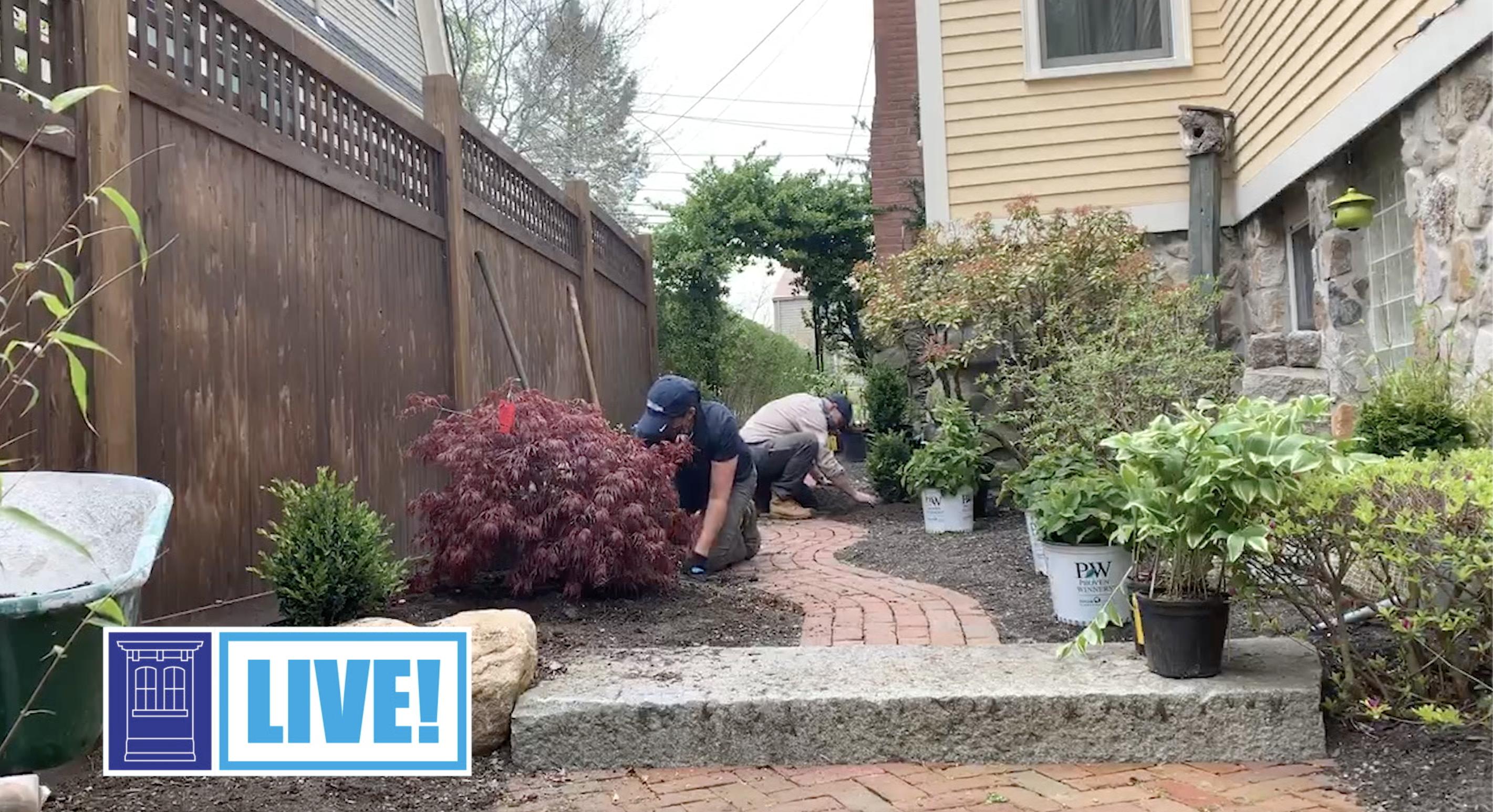 Adding plantings along a brick walkway
